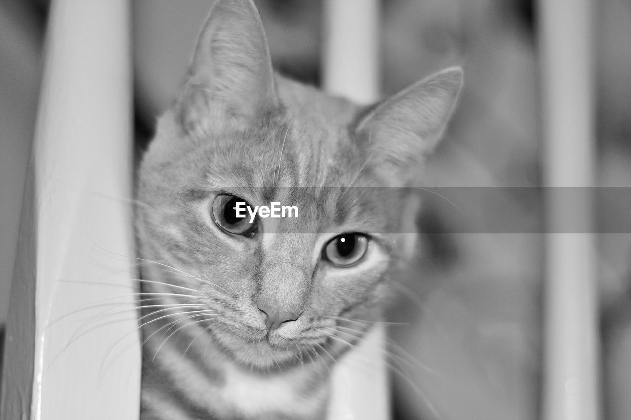 cat, pets, domestic, domestic cat, animal themes, domestic animals, feline, one animal, mammal, animal, vertebrate, portrait, looking at camera, close-up, no people, focus on foreground, whisker, indoors, animal body part, selective focus, animal head, animal eye