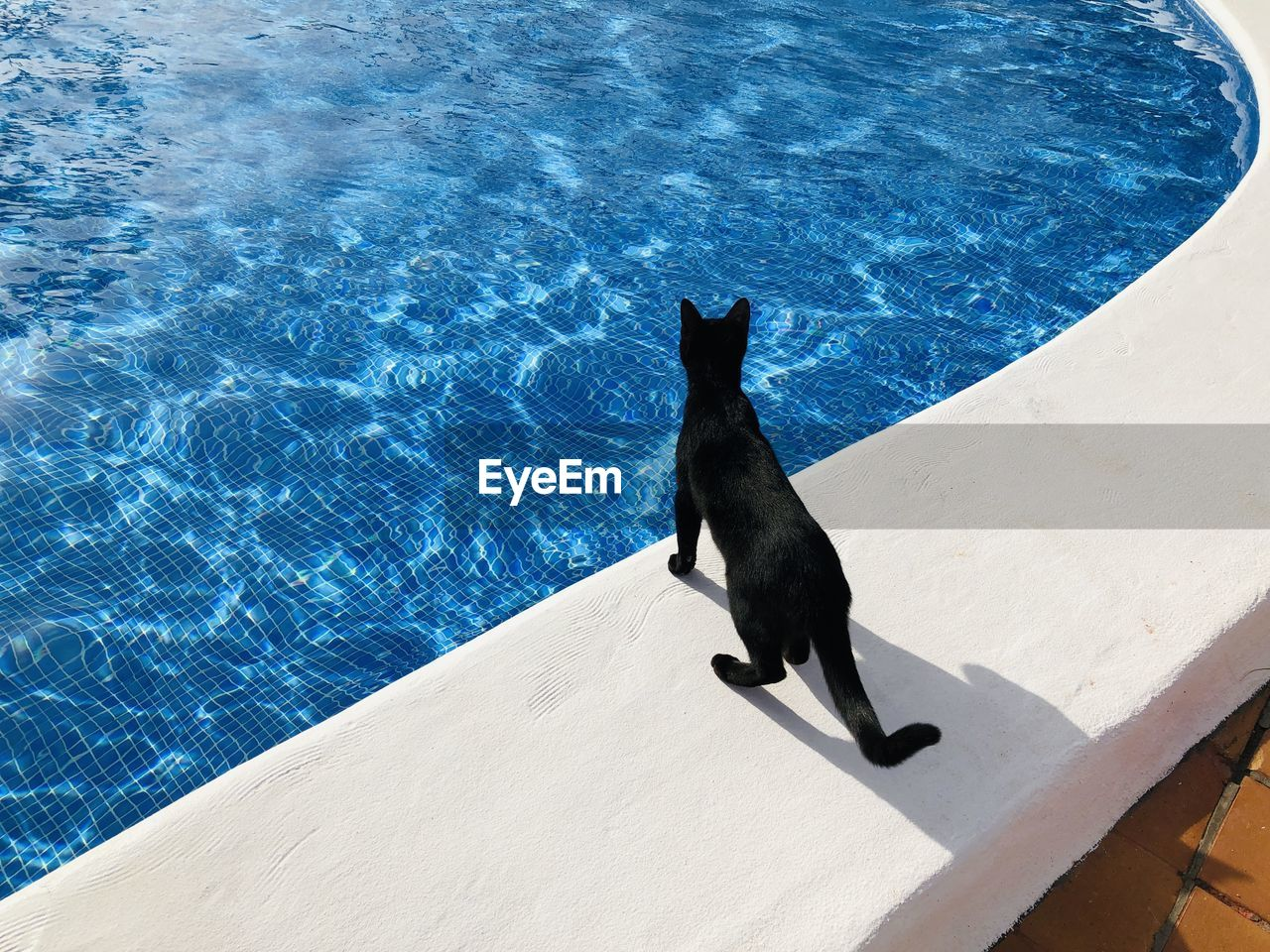 High angle view of black cat by swimming pool