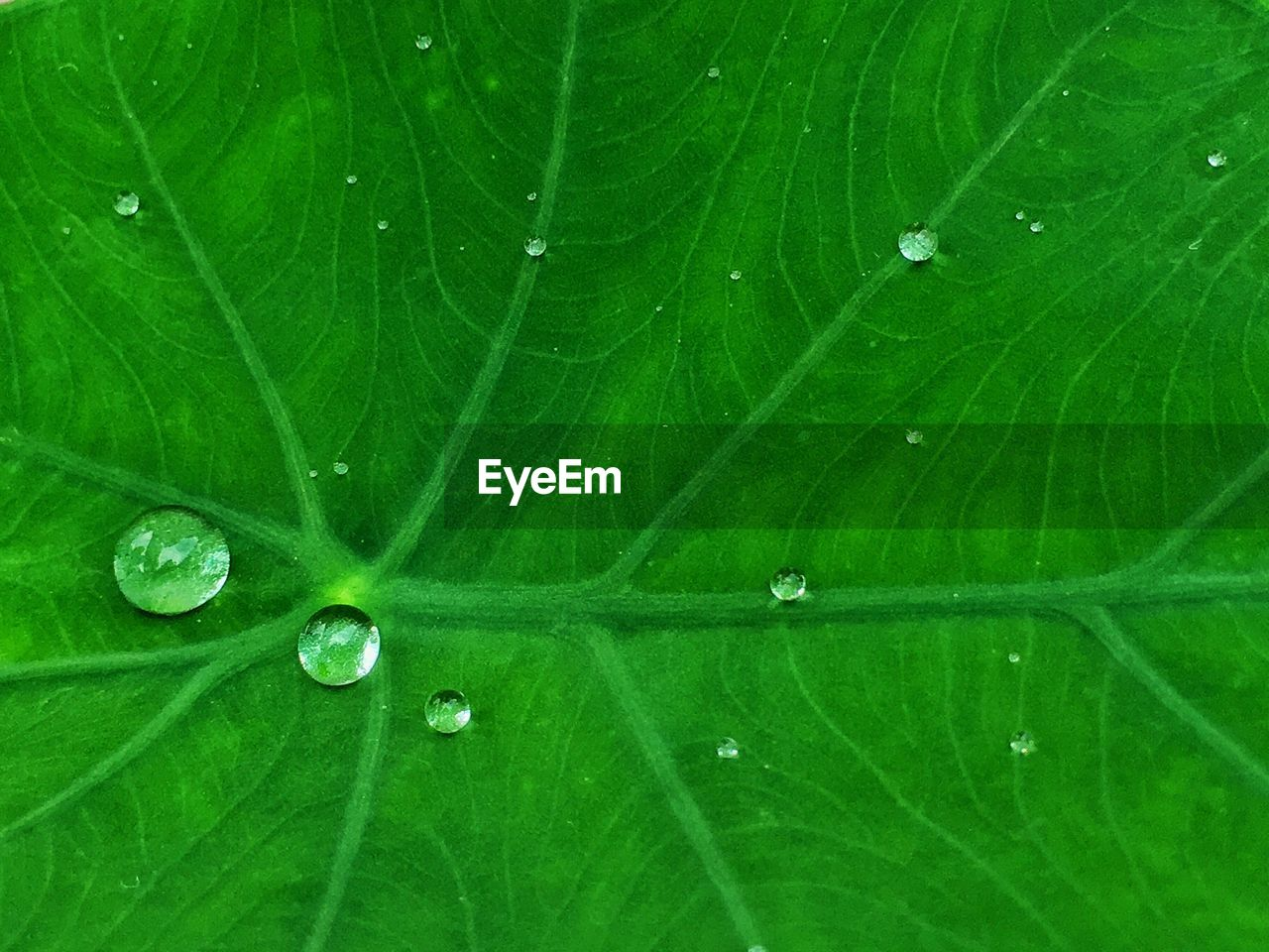 leaf, drop, green color, nature, water, close-up, freshness, fragility, backgrounds, full frame, beauty in nature, growth, no people, raindrop, plant, day, outdoors