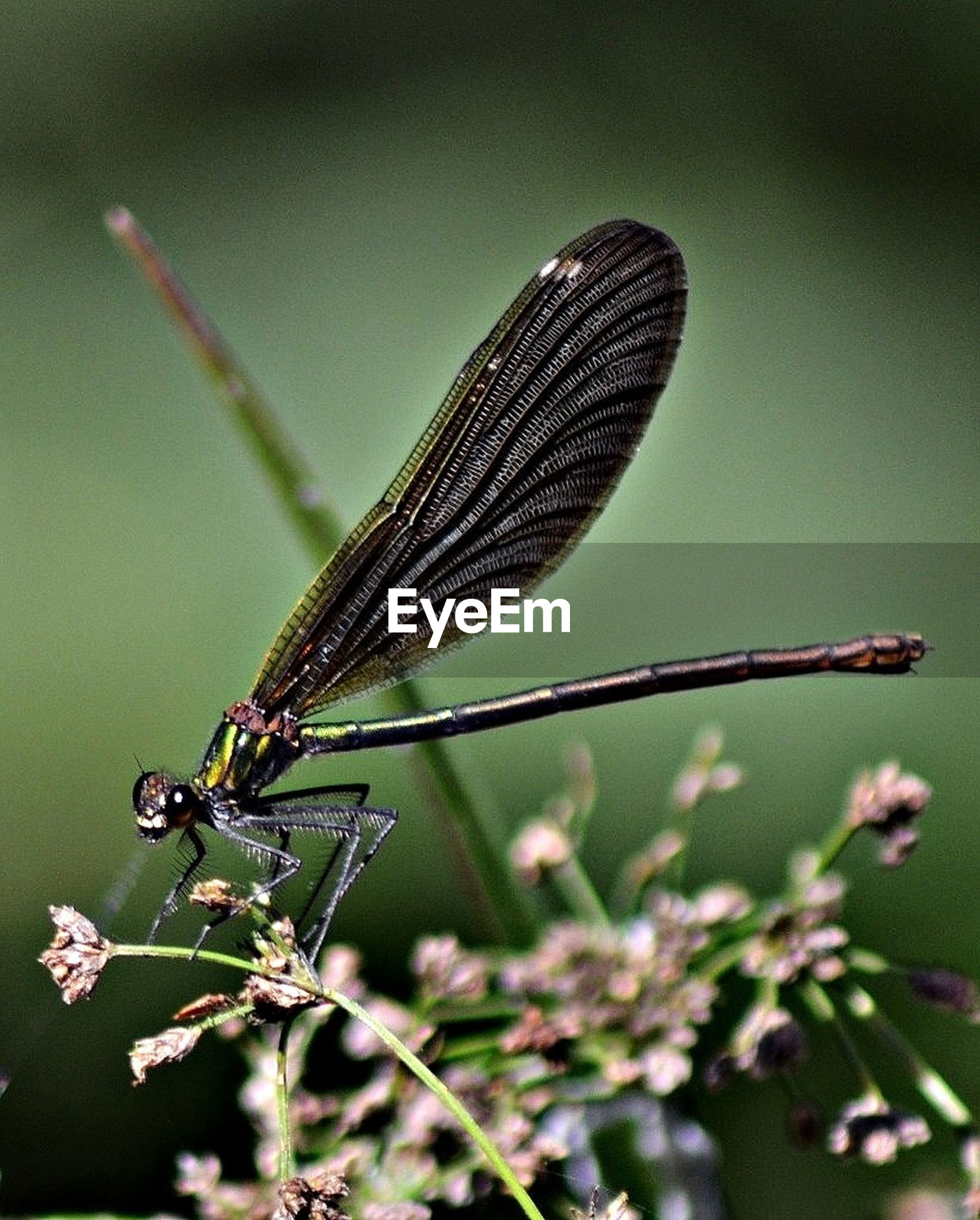 insect, one animal, animals in the wild, animal themes, wildlife, dragonfly, animal wing, close-up, focus on foreground, full length, nature, selective focus, zoology, invertebrate, day, outdoors, beauty in nature, butterfly, plant, animal antenna