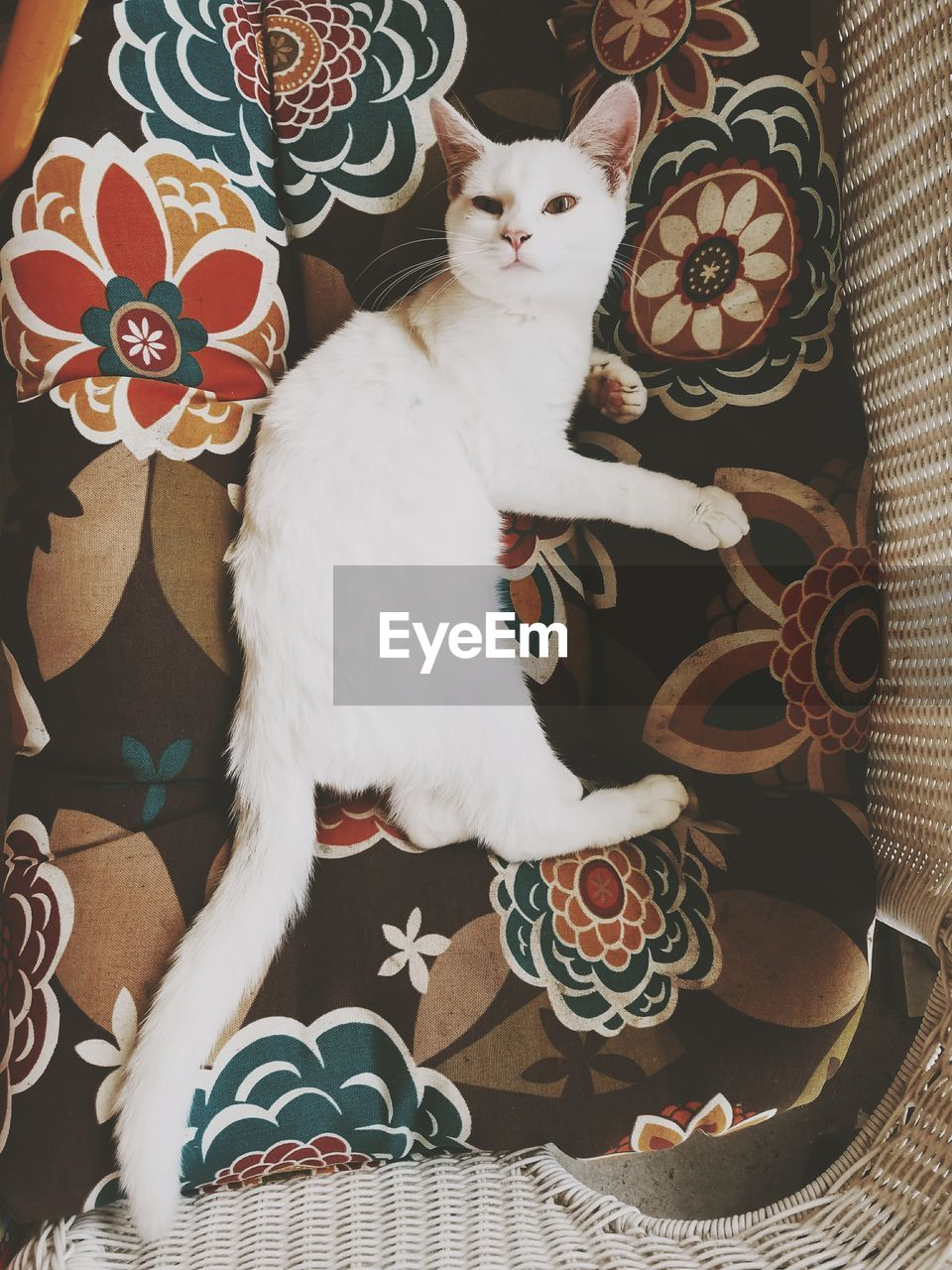 domestic animals, mammal, animal themes, domestic, animal, pets, vertebrate, domestic cat, one animal, cat, indoors, feline, pattern, no people, high angle view, sitting, home interior, representation, white color, looking, floral pattern, whisker