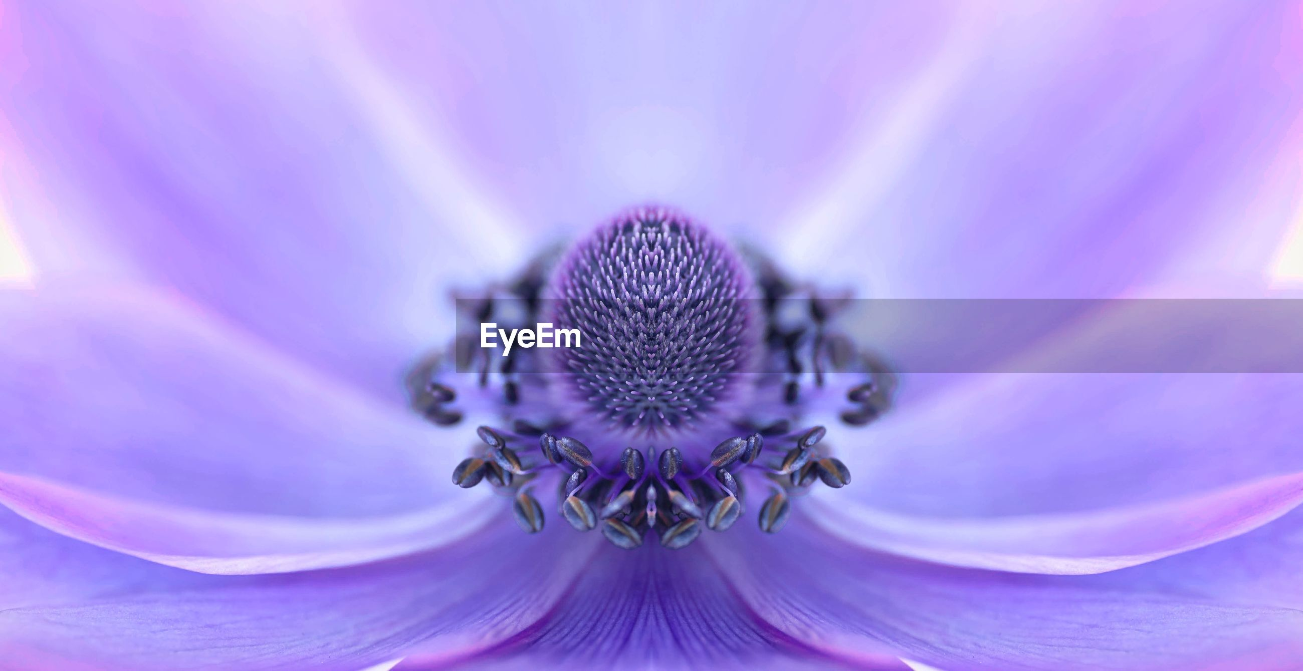 EXTREME CLOSE-UP OF PURPLE FLOWER