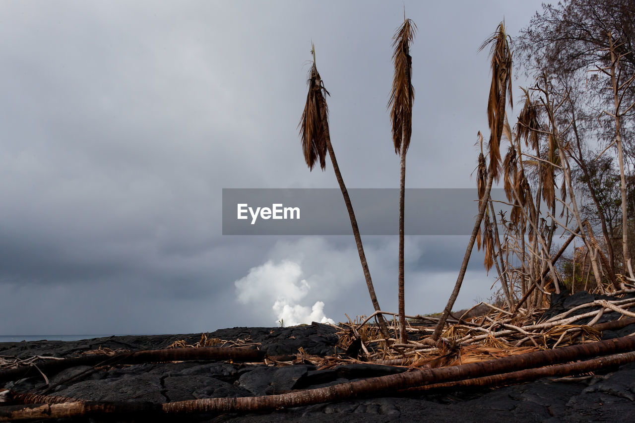 CLOSE-UP OF DRY PLANTS AGAINST SKY