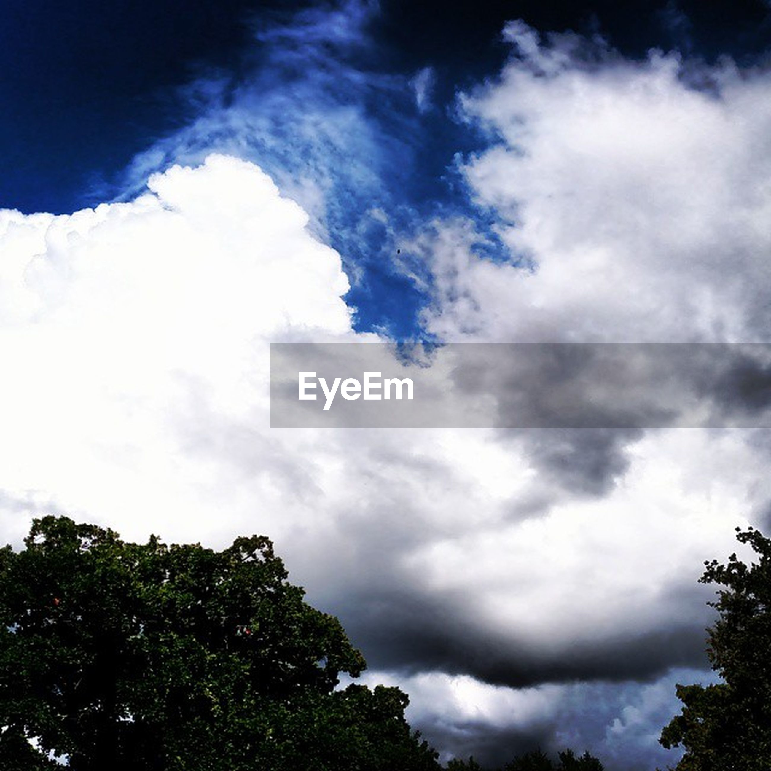 low angle view, sky, tree, cloud - sky, beauty in nature, cloudy, tranquility, nature, scenics, high section, growth, tranquil scene, cloud, treetop, cloudscape, outdoors, day, weather, no people, idyllic