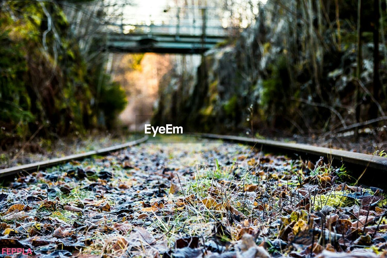 railroad track, rail transportation, transportation, no people, day, nature, outdoors, close-up