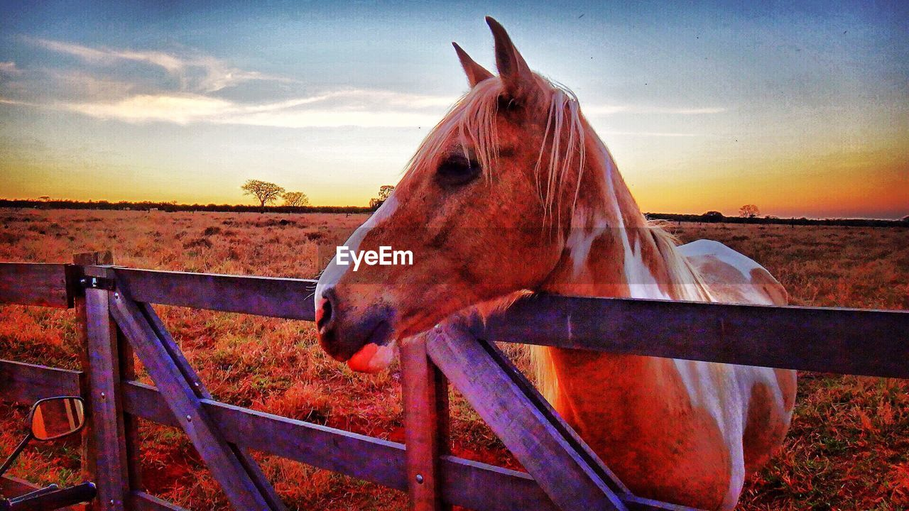 horse, animal themes, sky, domestic animals, one animal, mammal, outdoors, sunset, field, no people, paddock, nature, day, close-up, oil pump