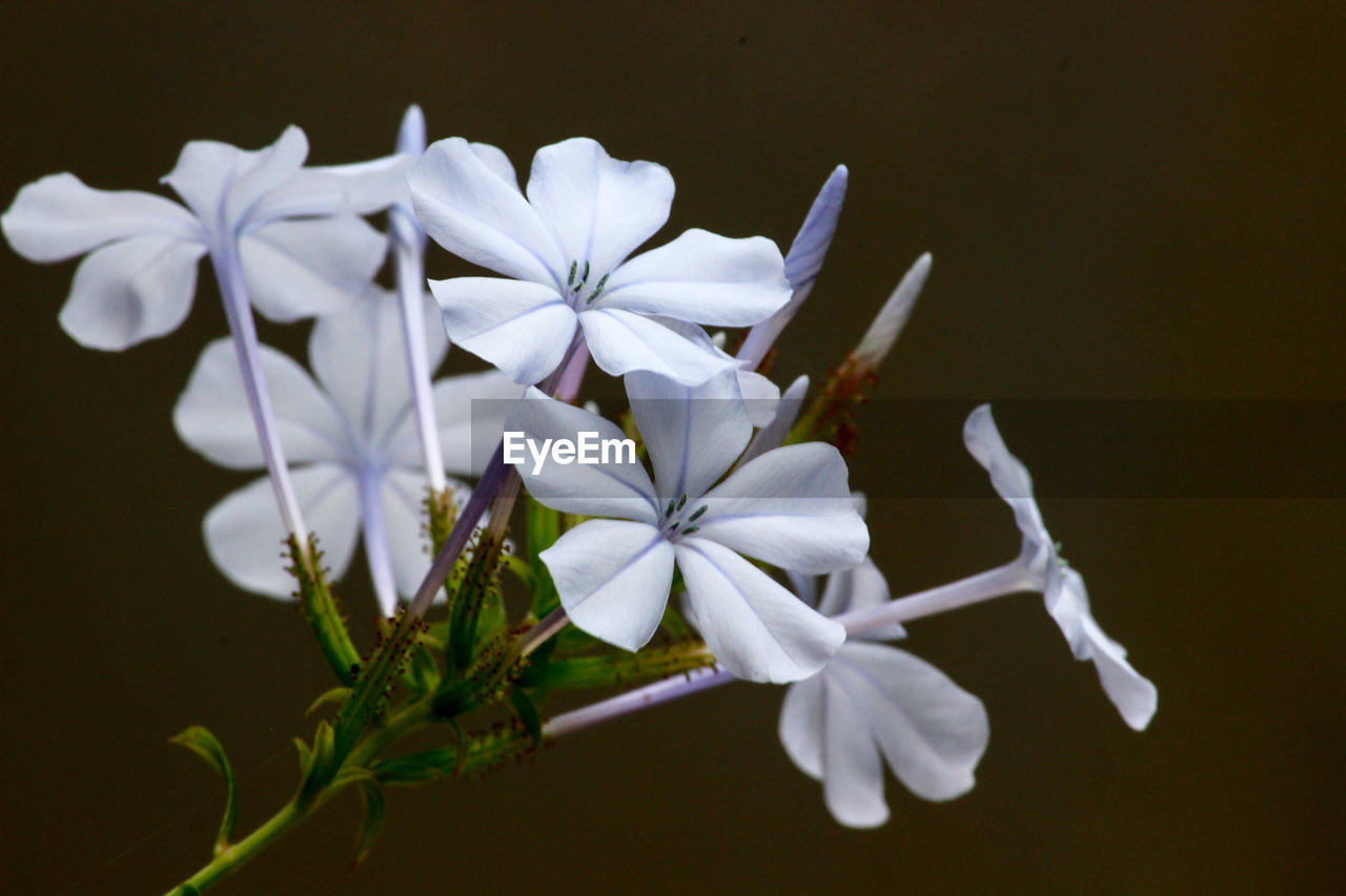 flowering plant, flower, fragility, vulnerability, plant, beauty in nature, petal, freshness, close-up, flower head, growth, inflorescence, white color, nature, no people, outdoors, selective focus, day, focus on foreground, botany, purple