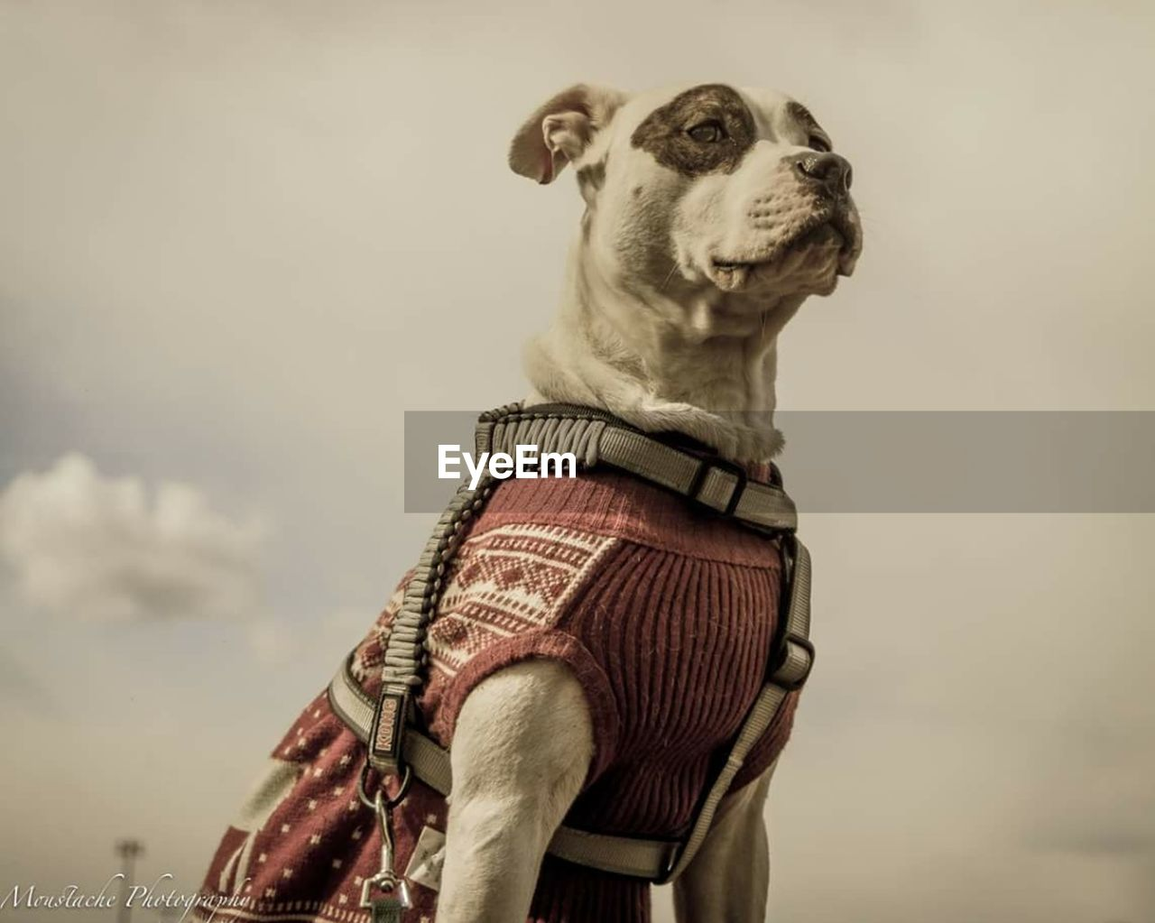 one animal, domestic animals, dog, pets, mammal, standing, outdoors, men, real people, sky, day, one person, collar, people