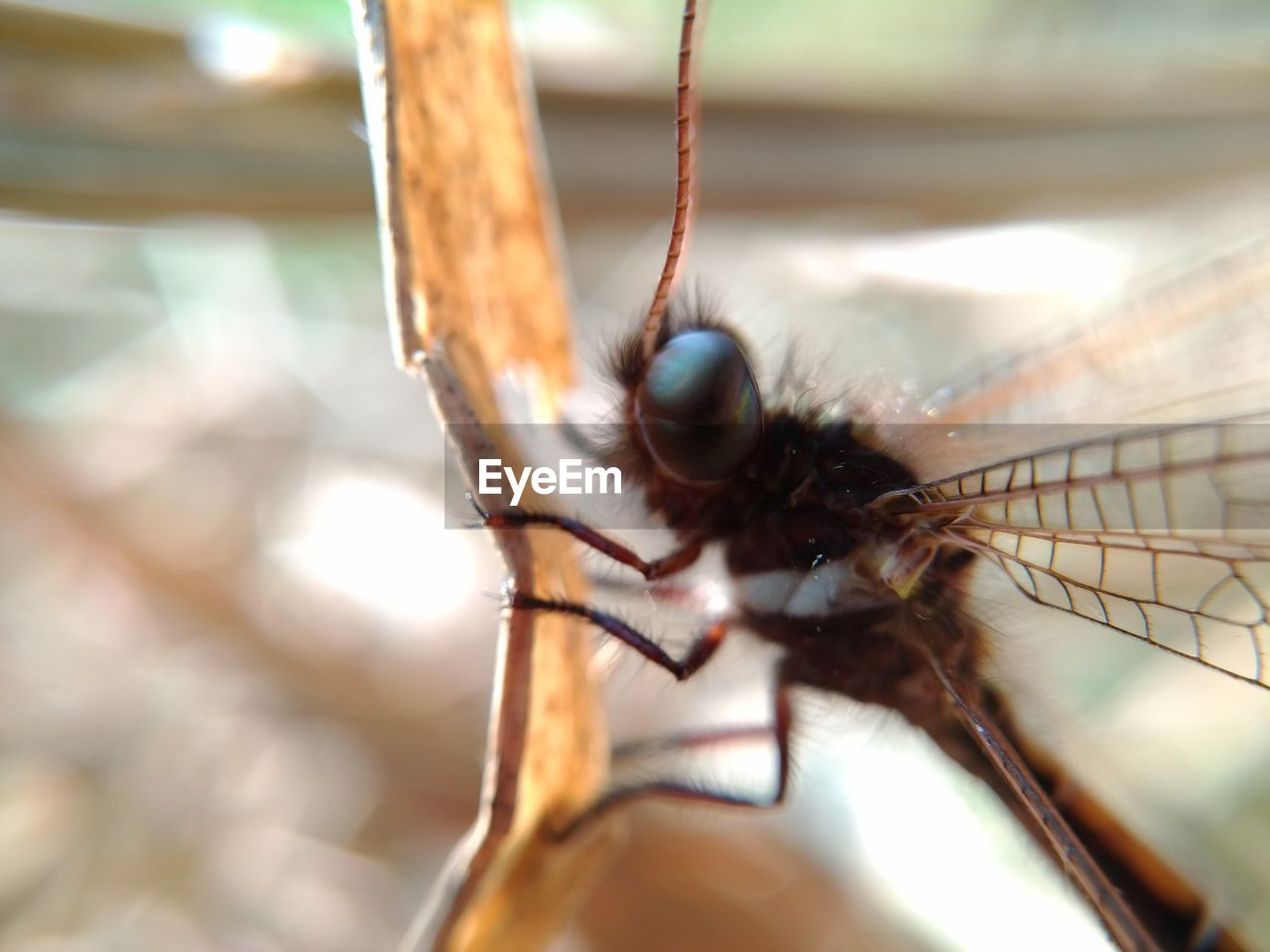 invertebrate, insect, animal themes, animals in the wild, animal wildlife, one animal, animal, close-up, animal wing, selective focus, day, animal body part, nature, eye, no people, animal eye, outdoors, zoology, focus on foreground, macro