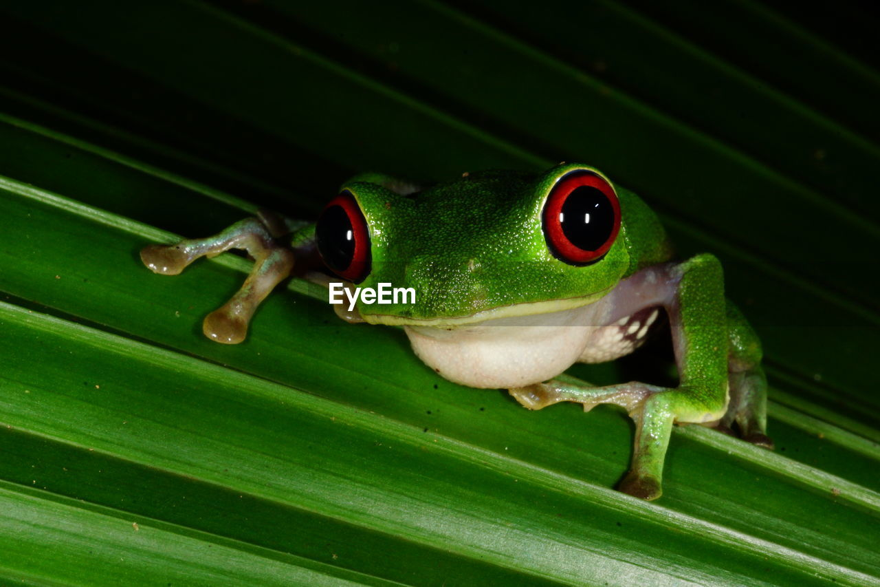 Close-up of frog on leaf