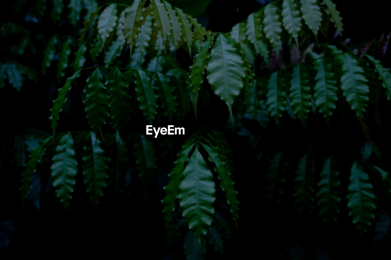 growth, green color, nature, plant, leaf, beauty in nature, fern, no people, tranquility, freshness, fragility, outdoors, close-up, day, frond, tree