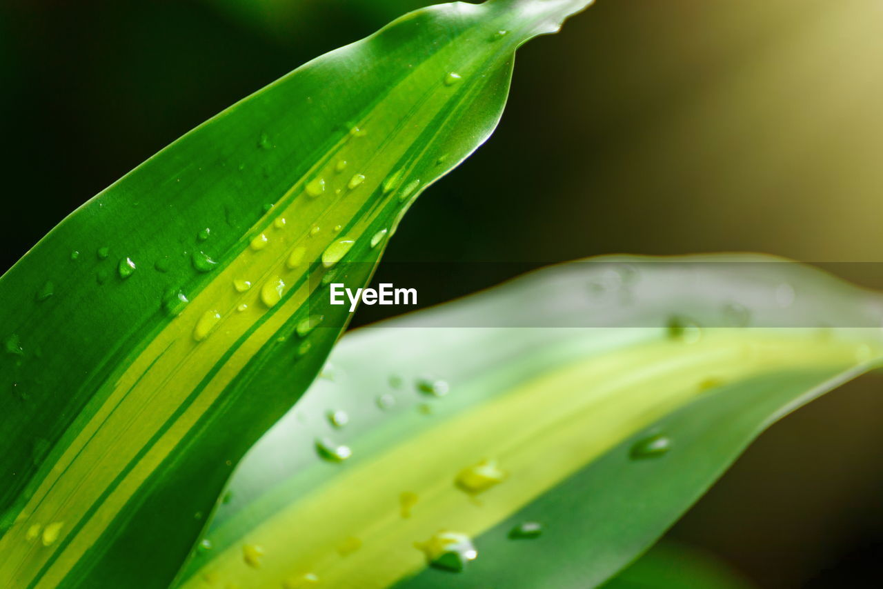 green color, drop, water, wet, close-up, freshness, growth, nature, no people, leaf, outdoors, day, beauty in nature, raindrop, plant, fragility, purity