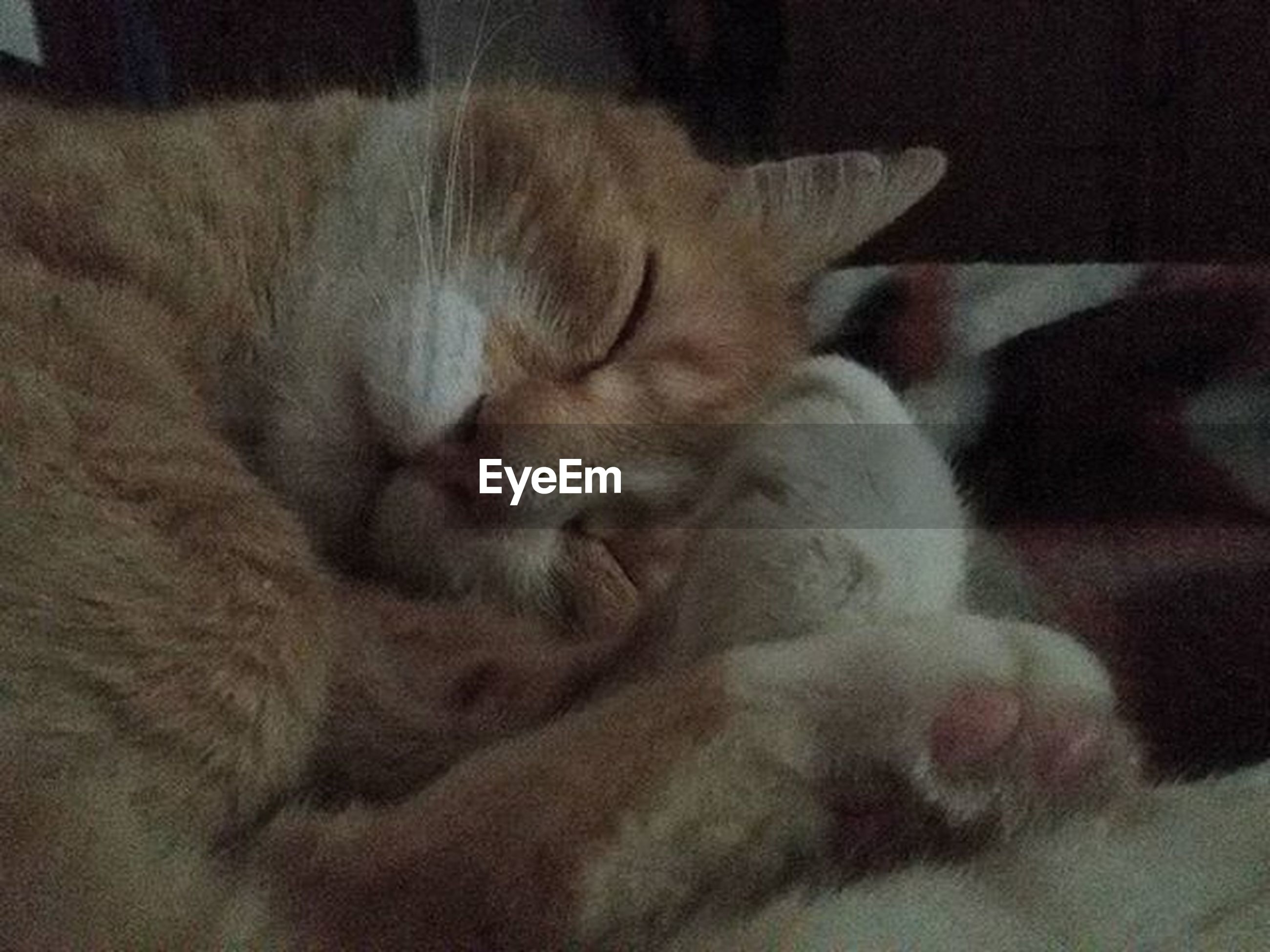 domestic animals, pets, mammal, animal themes, domestic cat, indoors, one animal, cat, sleeping, relaxation, feline, resting, eyes closed, lying down, whisker, close-up, home interior, animal head, home, bed