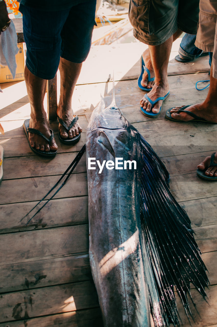 low section, real people, human leg, human body part, men, people, fish, body part, lifestyles, vertebrate, high angle view, day, leisure activity, flooring, group of people, occupation, wellbeing, freshness, indoors, human foot, fishing industry