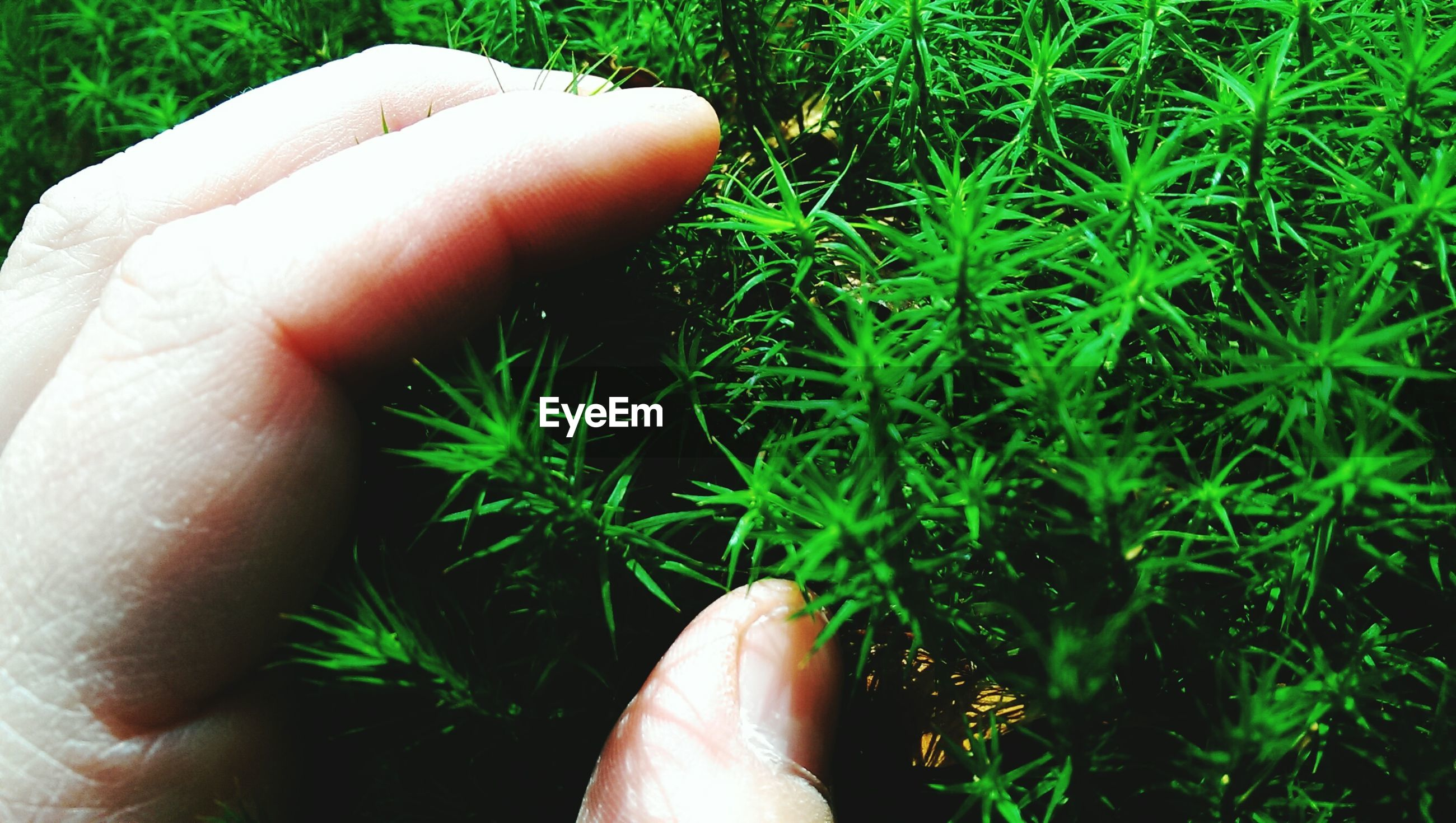 person, personal perspective, part of, grass, cropped, low section, human finger, holding, unrecognizable person, lifestyles, green color, plant, field, human foot, growth