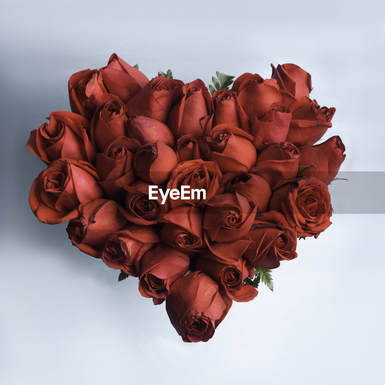 flower, beauty in nature, rose, flowering plant, close-up, nature, rose - flower, plant, freshness, petal, flower head, vulnerability, inflorescence, fragility, red, no people, indoors, studio shot, white background, sky, flower arrangement, bouquet
