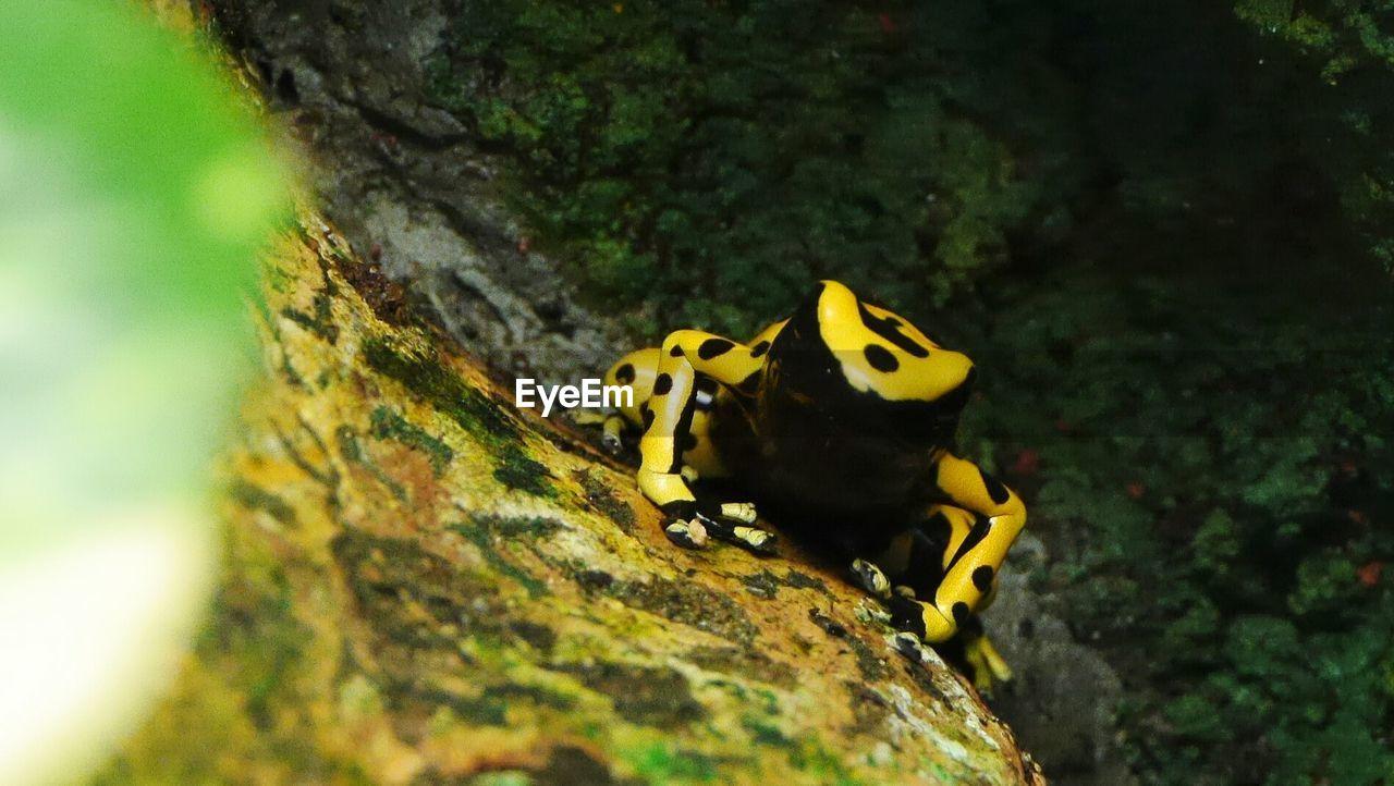 High Angle View Of Frog