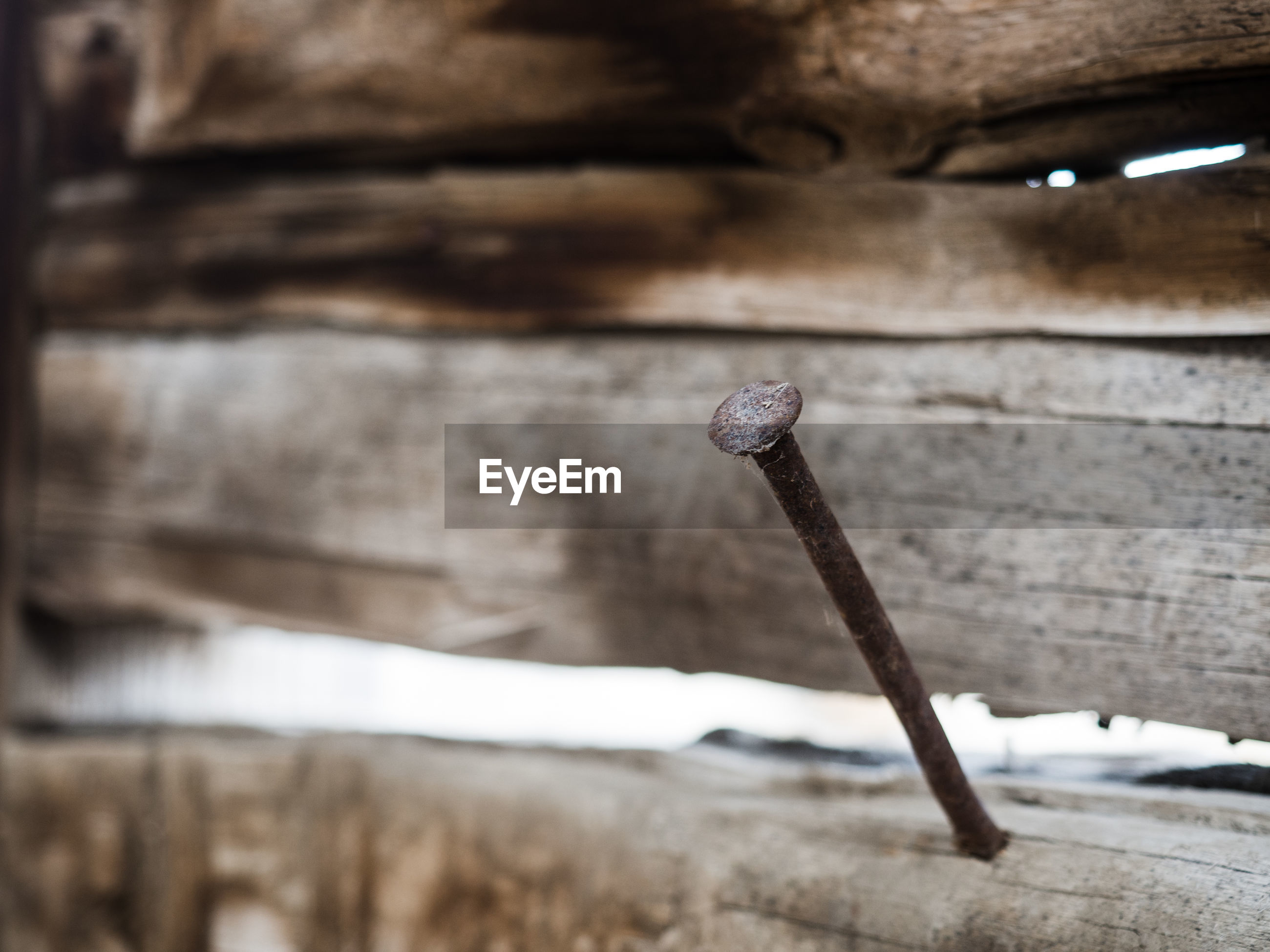 Close-up of nail on wooden fence