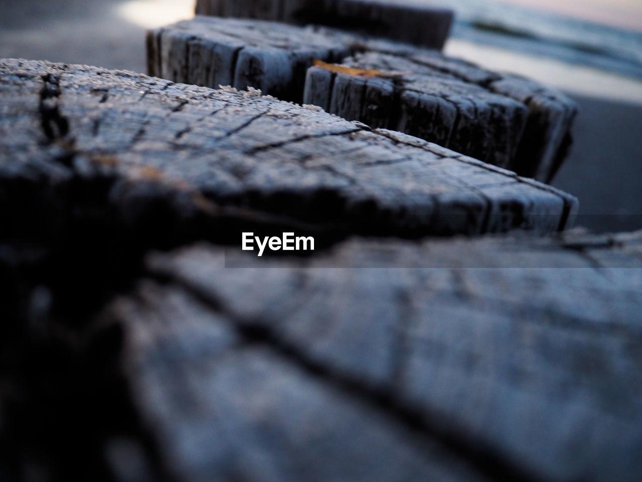 Close-up of tree stumps