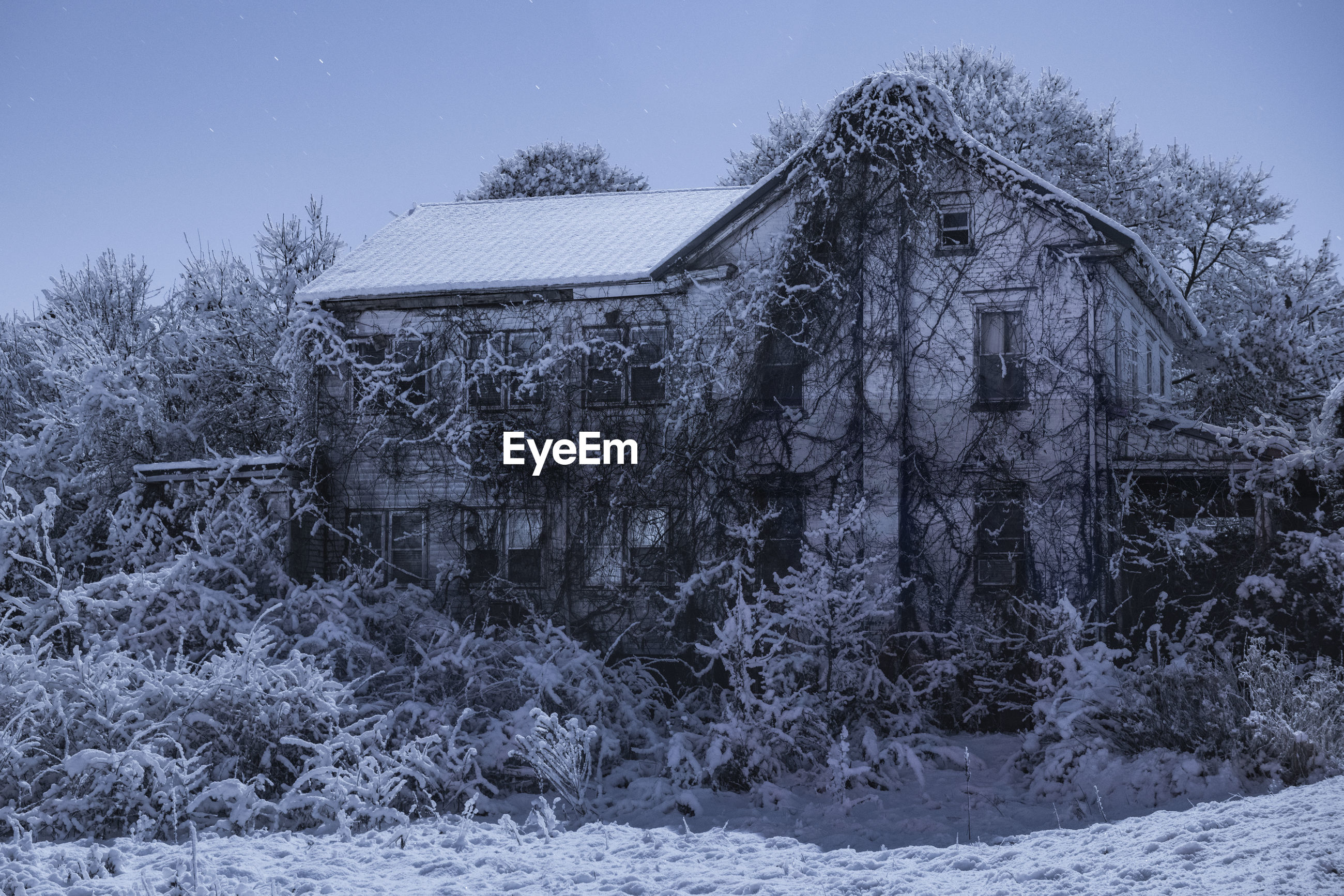 BARE TREES ON SNOW COVERED FIELD AGAINST BUILDINGS