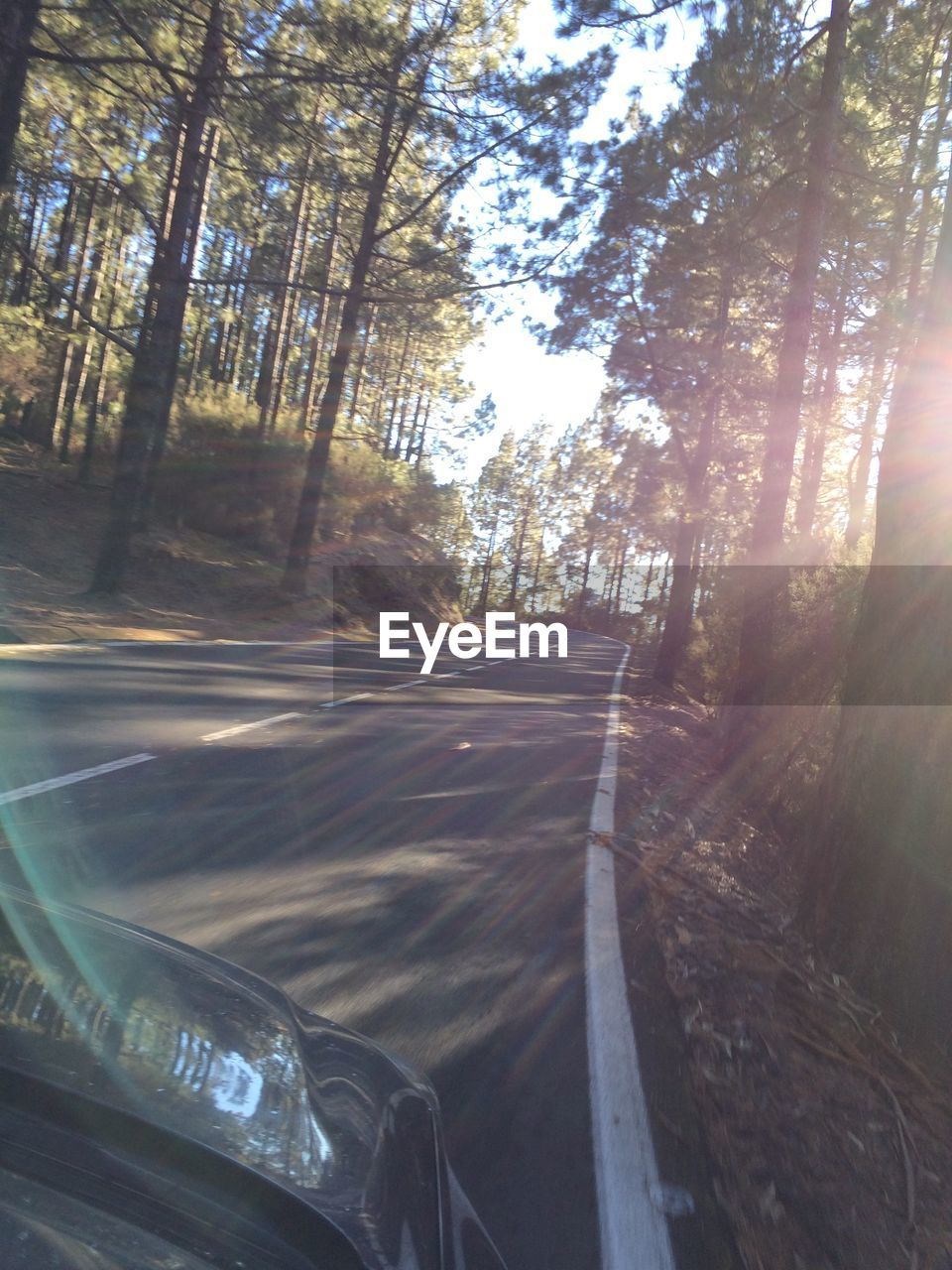 tree, transportation, road, car, the way forward, no people, day, sunlight, nature, forest, land vehicle, outdoors, close-up, sky