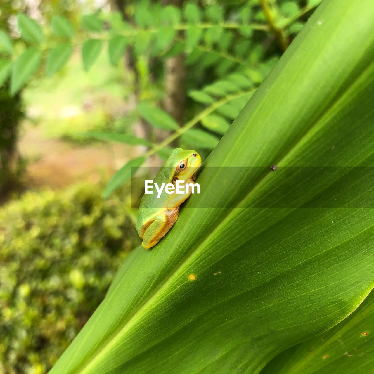 animal themes, green color, animal, animals in the wild, one animal, animal wildlife, plant part, leaf, plant, vertebrate, nature, close-up, no people, reptile, amphibian, day, growth, lizard, frog, selective focus, outdoors