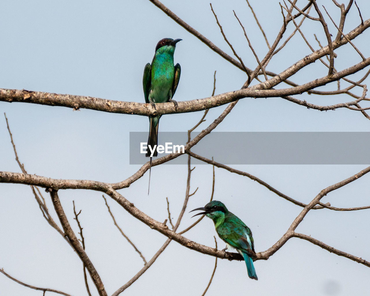 vertebrate, bird, animal themes, animal, perching, animal wildlife, branch, animals in the wild, tree, one animal, green color, plant, no people, nature, sky, low angle view, day, beauty in nature, focus on foreground, outdoors