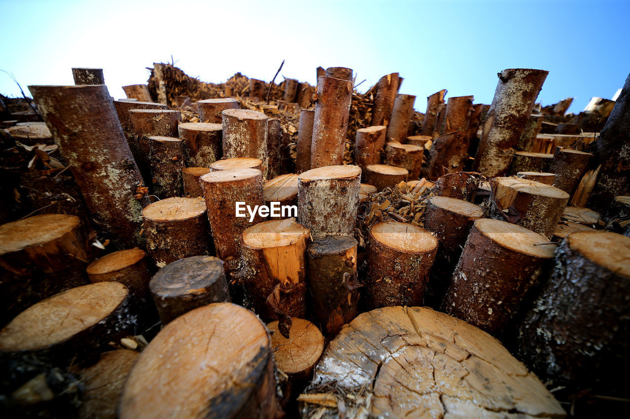STACK OF FIREWOOD IN FOREST AGAINST SKY