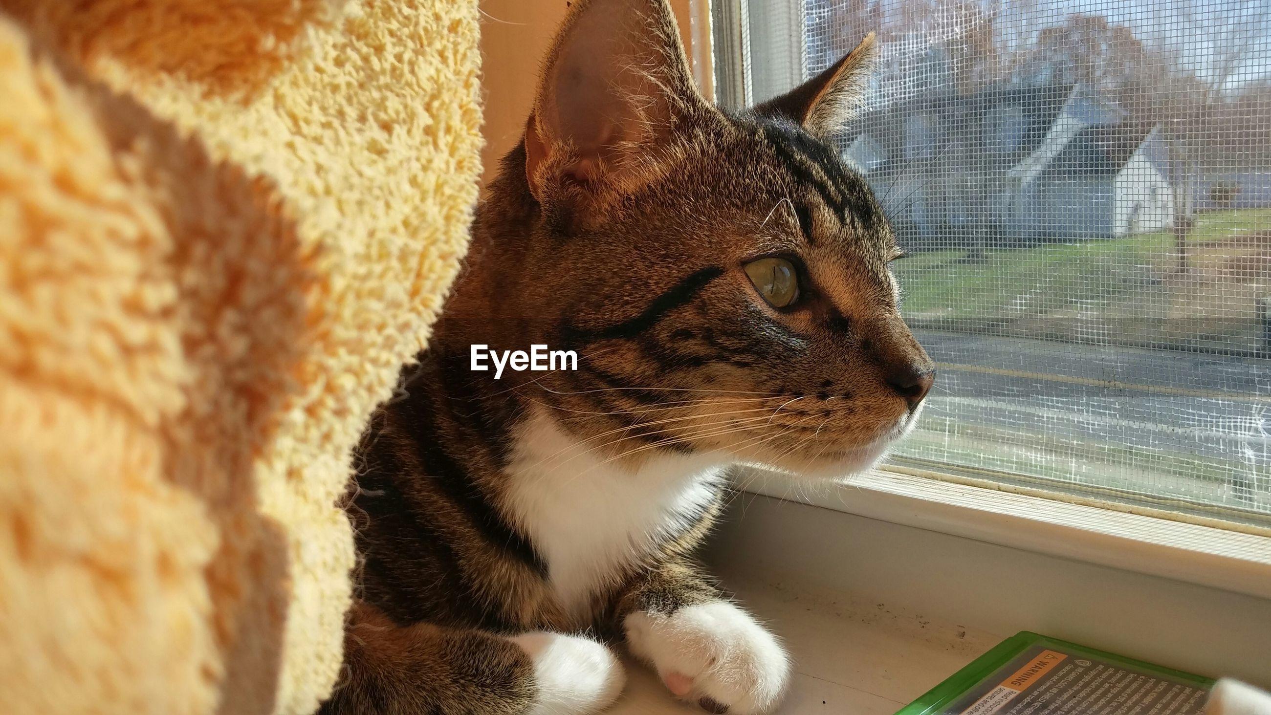 Close-up of cat sitting on window