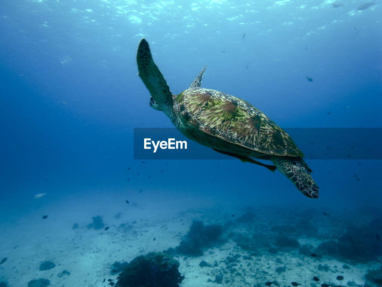animal, underwater, sea, animal themes, swimming, animals in the wild, animal wildlife, water, undersea, one animal, sea life, marine, vertebrate, fish, turtle, blue, nature, reptile, no people