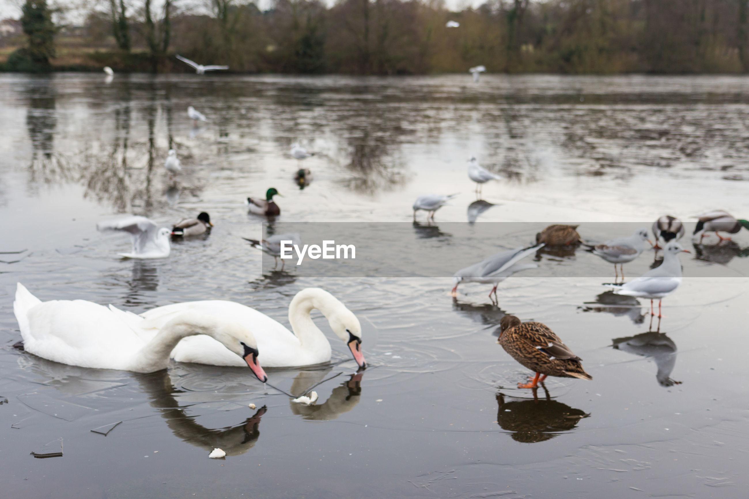Birds on lake during winter