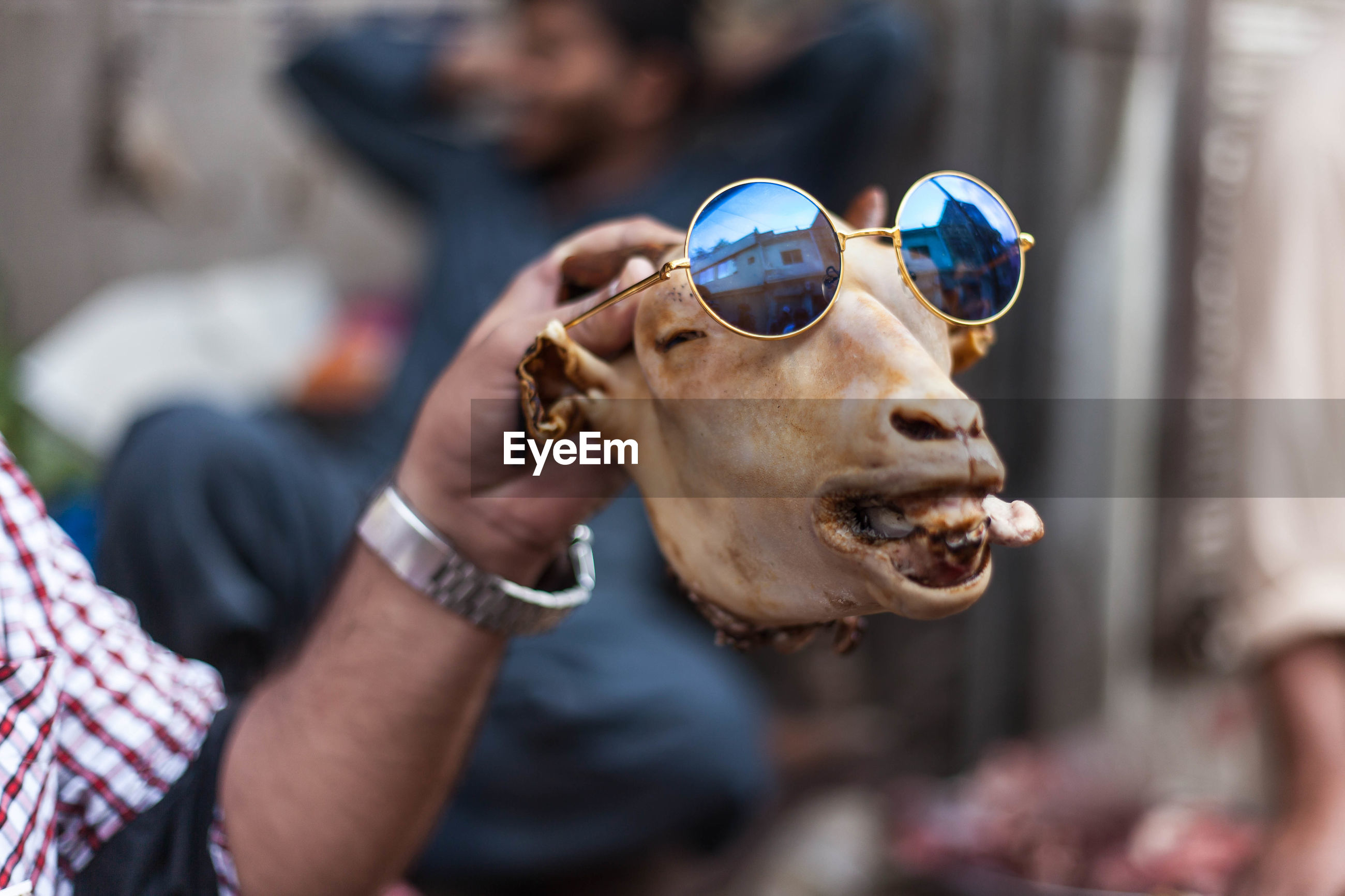 Cropped hand of young man holding sunglasses on animal skull