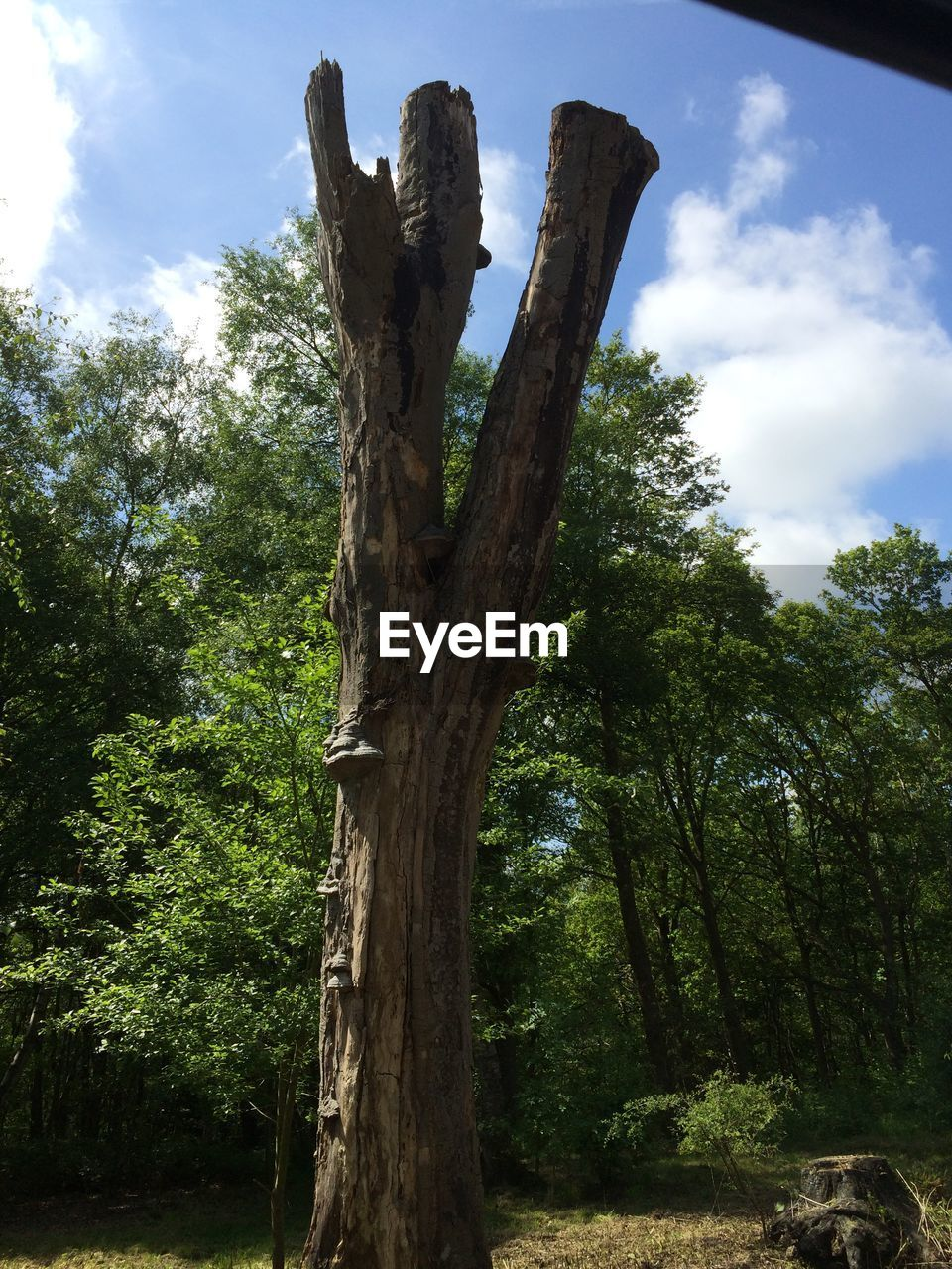 tree, tree trunk, nature, growth, no people, forest, day, outdoors, sky, beauty in nature
