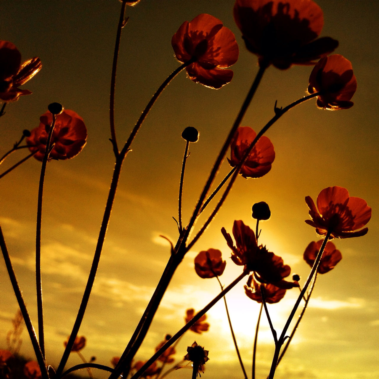 Close-up of flowers growing on field at sunset