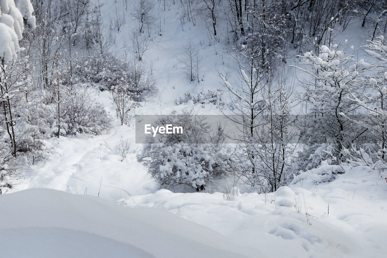 SNOW COVERED LAND ON TREES