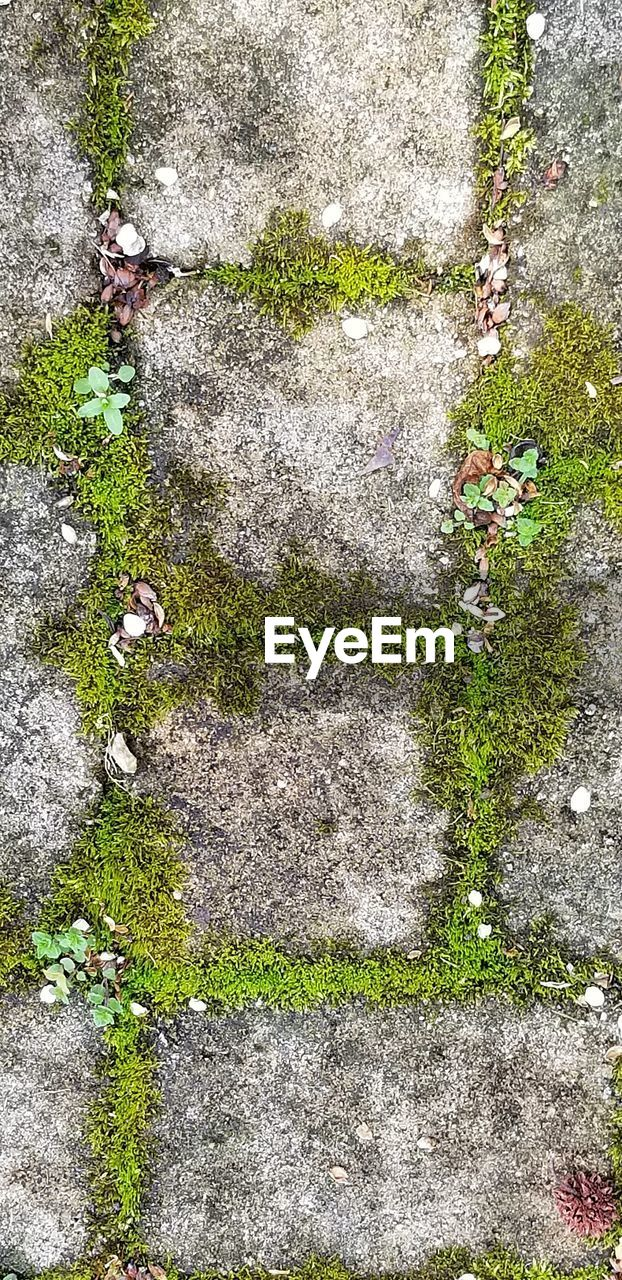 high angle view, plant, day, no people, footpath, growth, nature, green color, outdoors, concrete, grass, moss, flowering plant, flower, solid, city, directly above, plant part, leaf, street, paving stone