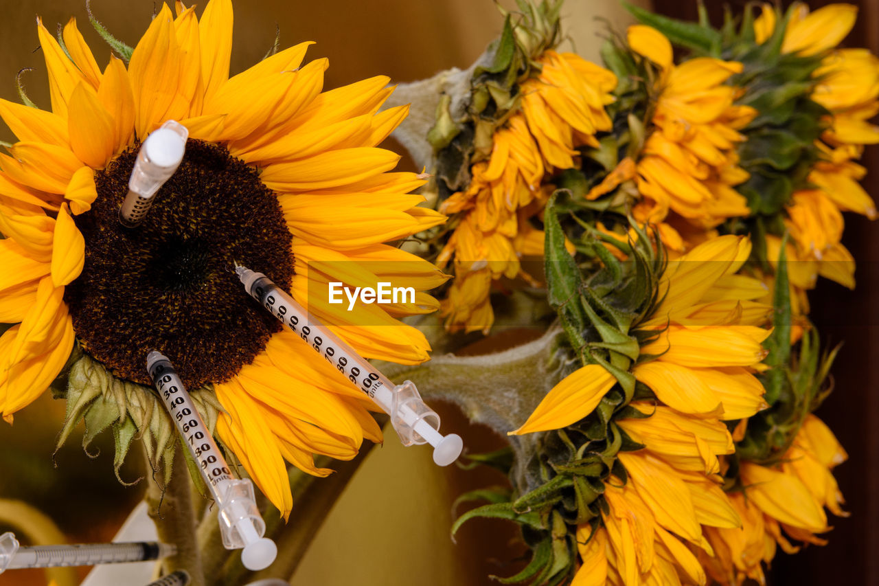 yellow, flower, flowering plant, flower head, vulnerability, fragility, plant, inflorescence, petal, beauty in nature, growth, freshness, close-up, nature, no people, sunflower, pollen, day, focus on foreground, outdoors, flower arrangement, bouquet