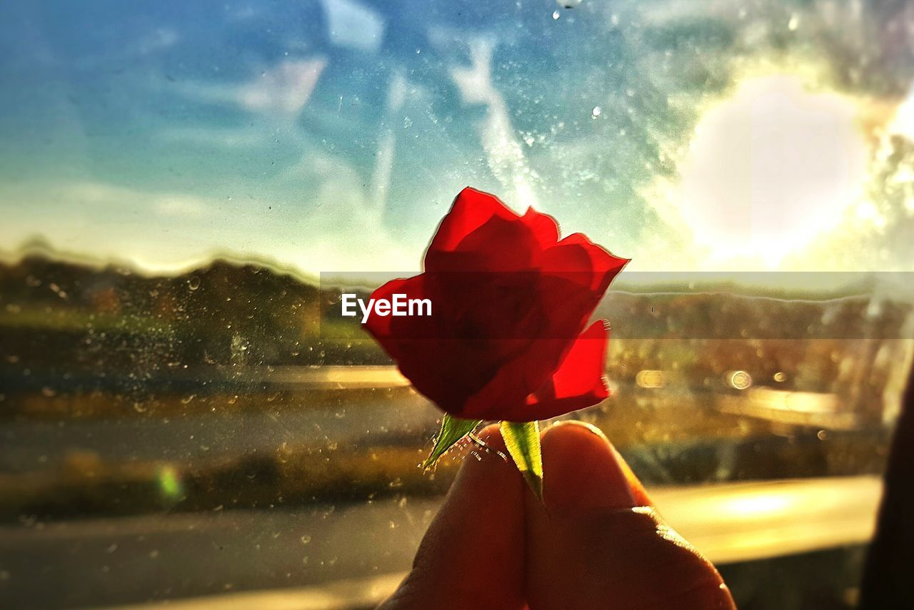 flower, red, rose - flower, human hand, petal, fragility, beauty in nature, one person, nature, sunlight, real people, holding, close-up, focus on foreground, flower head, water, human body part, freshness, day, sky, outdoors, people