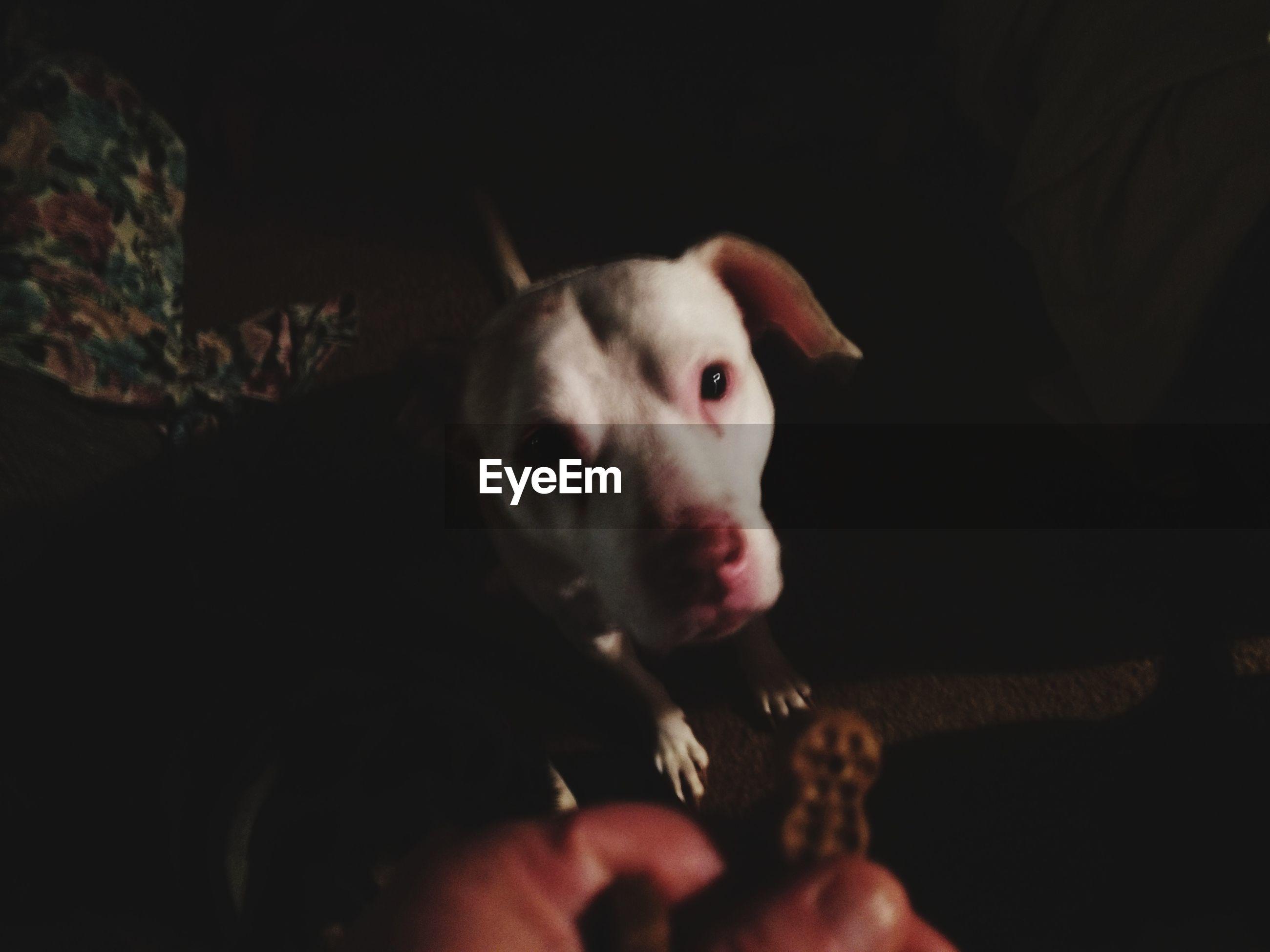 CLOSE-UP PORTRAIT OF DOG IN DARK