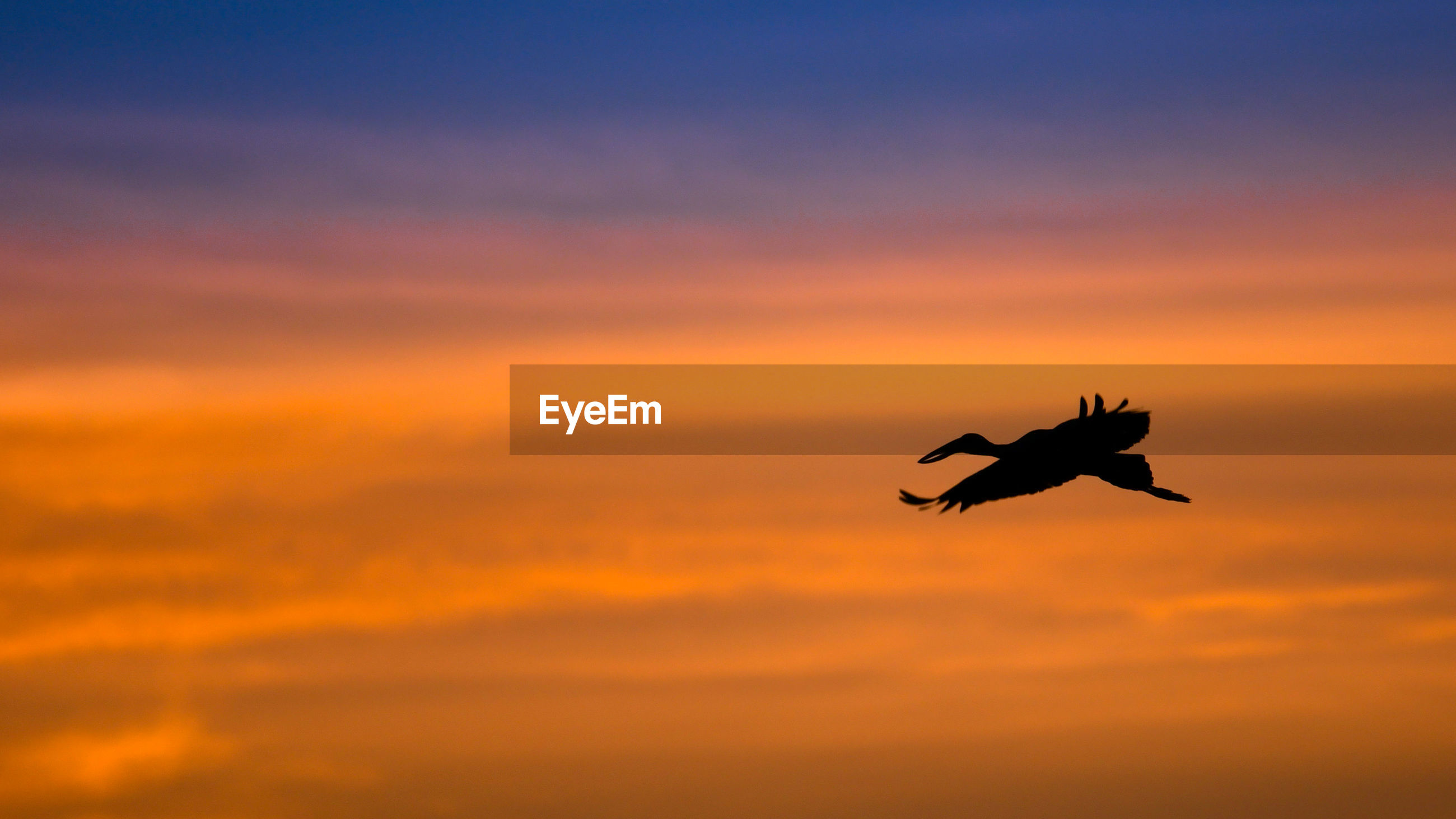 SILHOUETTE OF BIRD FLYING IN SKY
