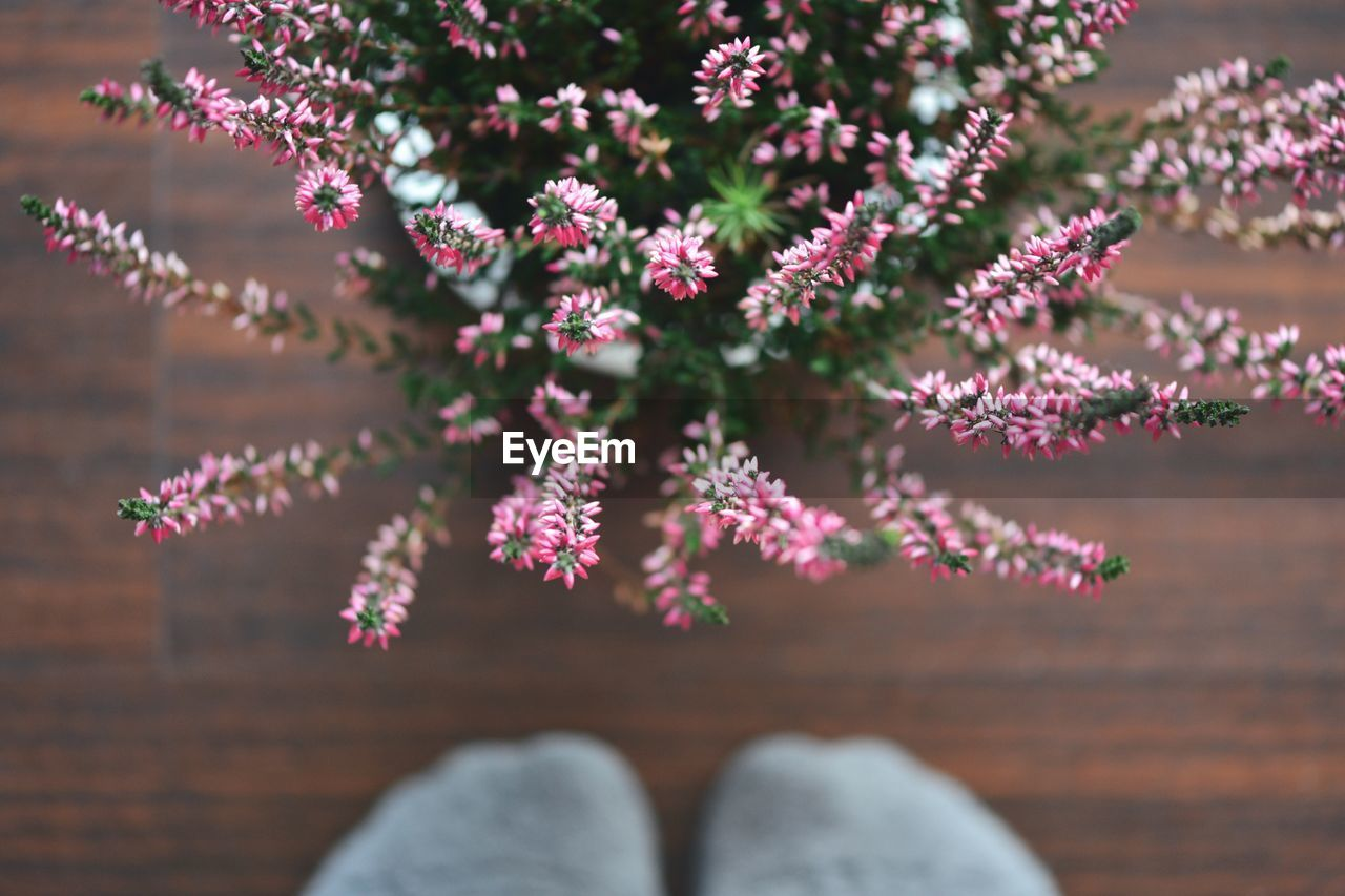 Directly Above View Of Fresh Pink Flowers At Home