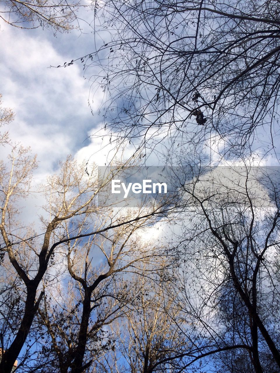 tree, low angle view, branch, sky, bare tree, nature, beauty in nature, no people, day, cloud - sky, outdoors, tranquility, forest, backgrounds