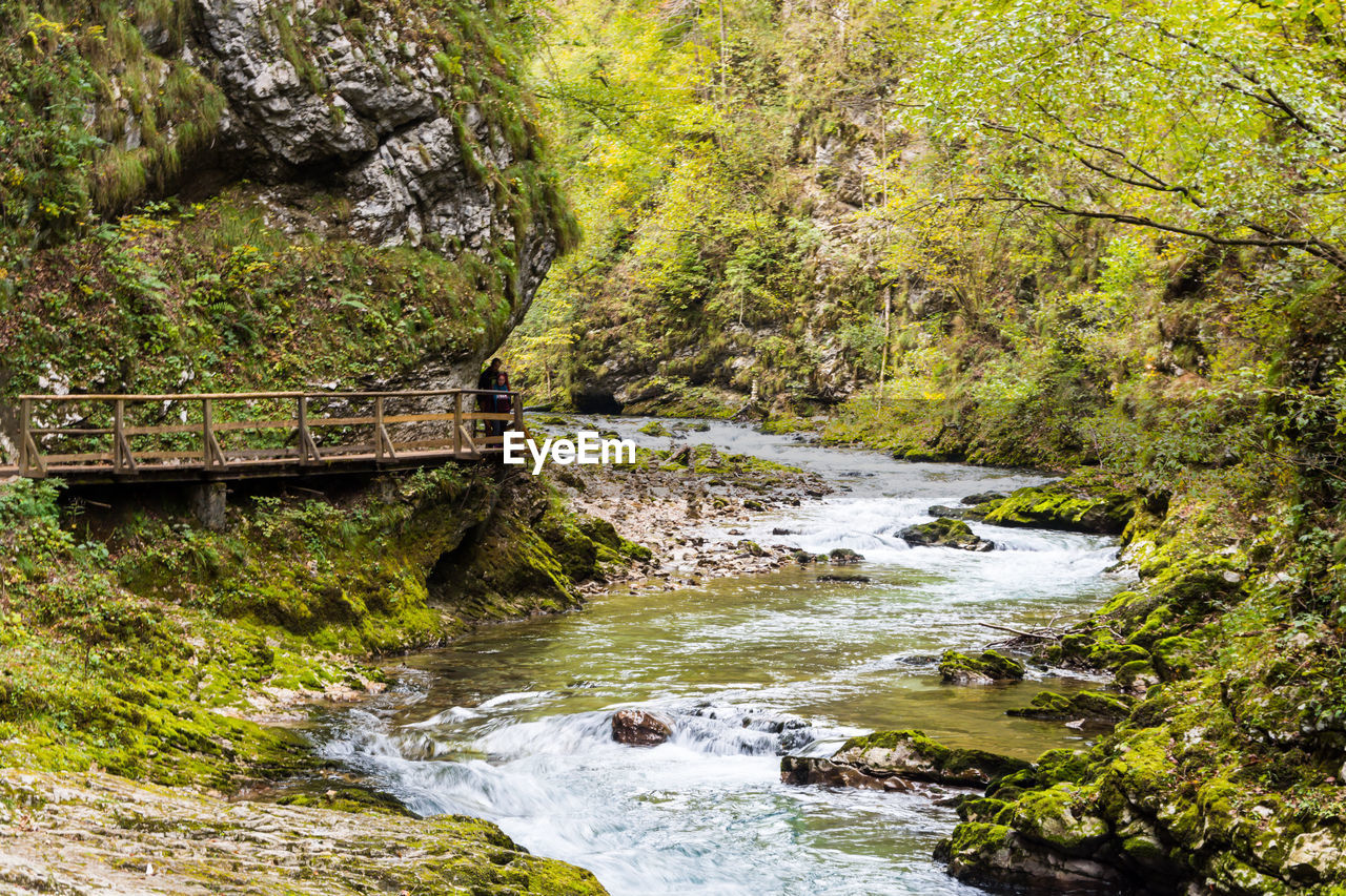 water, rock, tree, solid, rock - object, nature, forest, scenics - nature, beauty in nature, river, land, plant, motion, no people, day, flowing water, environment, travel destinations, flowing, stream - flowing water, outdoors, power in nature