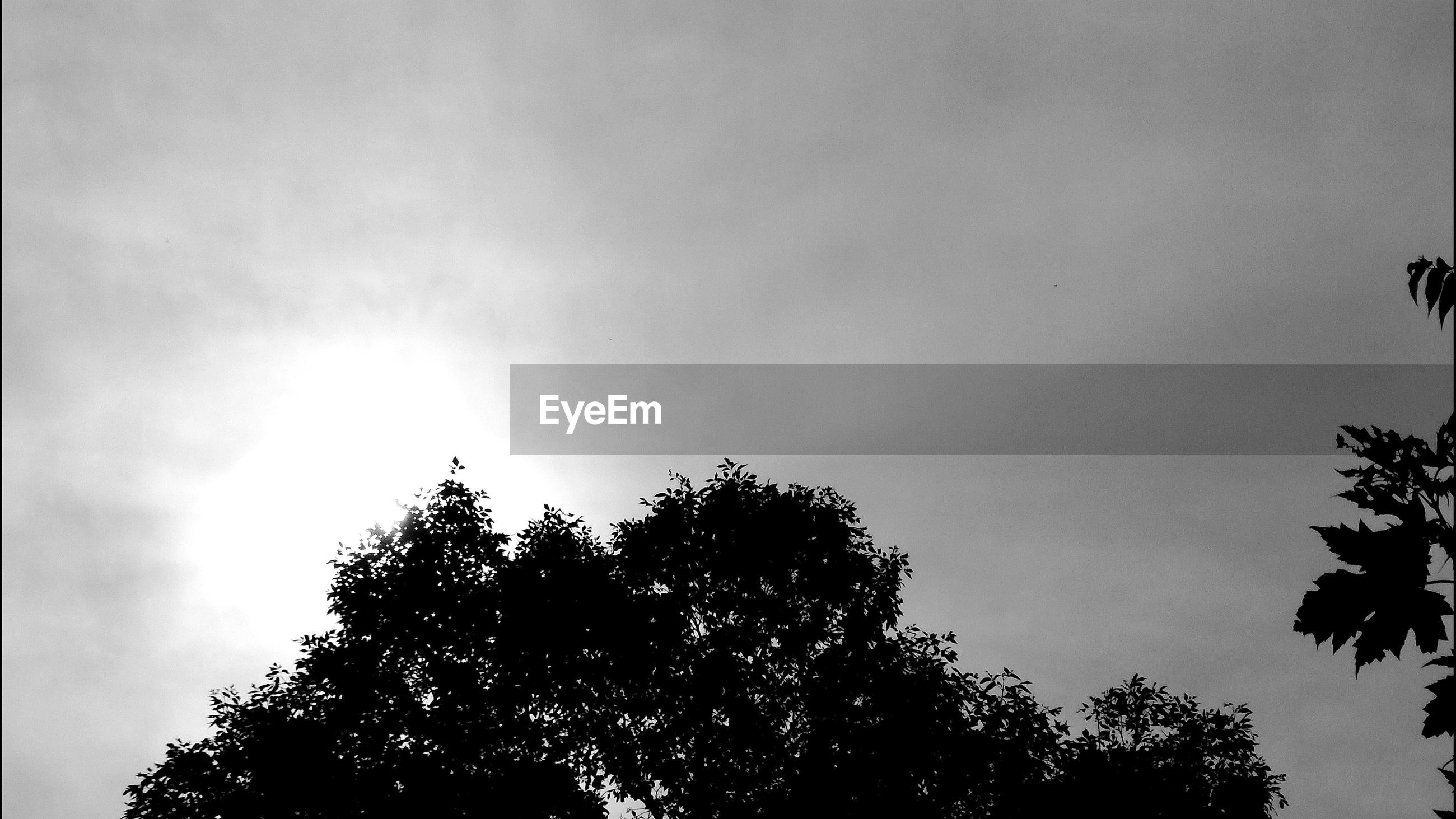 Low angle view of silhouette trees against cloudy sky on sunny day