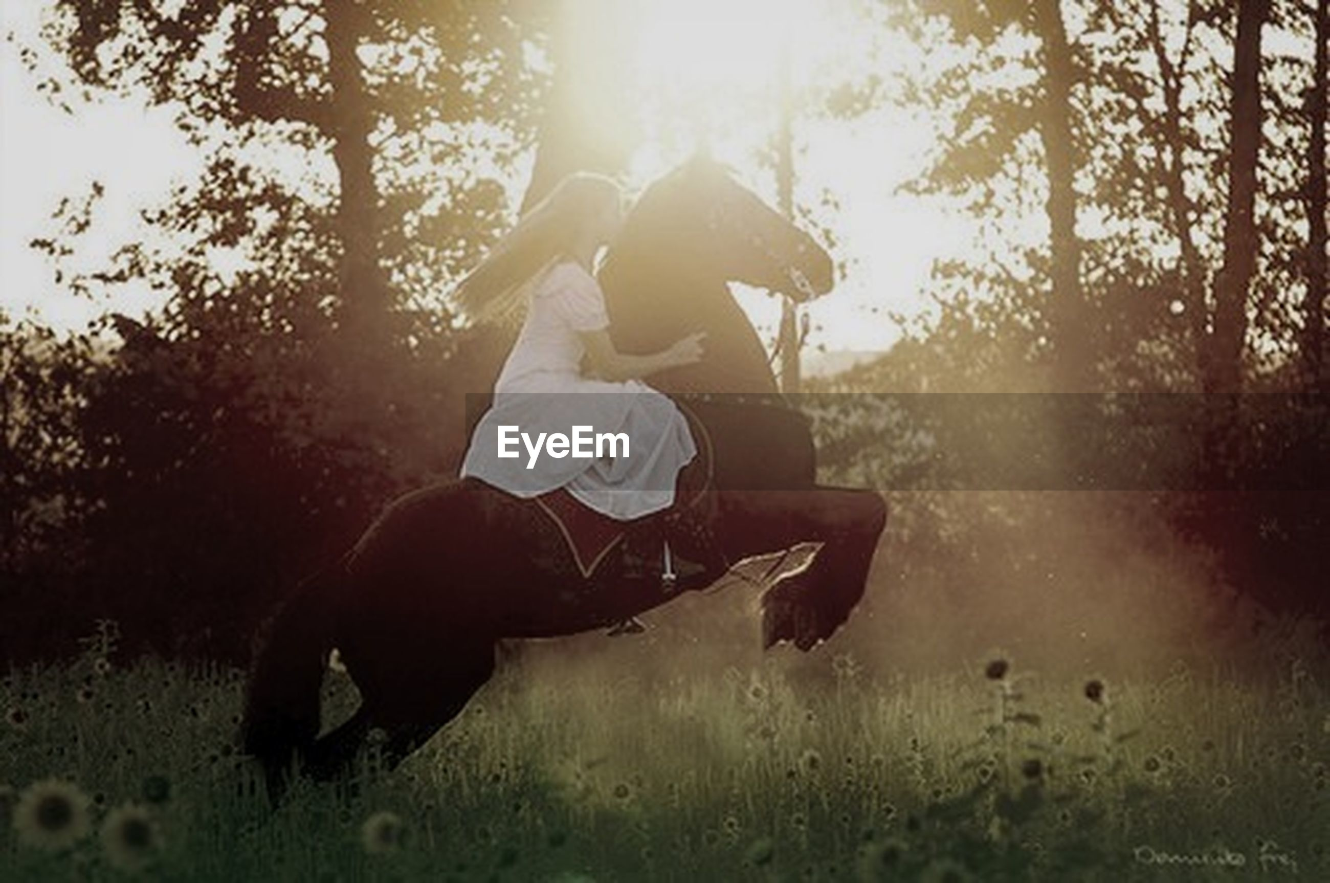 lifestyles, leisure activity, tree, full length, childhood, sunlight, jumping, enjoyment, fun, sport, playing, side view, mid-air, carefree, skill, field, sunbeam, outdoors