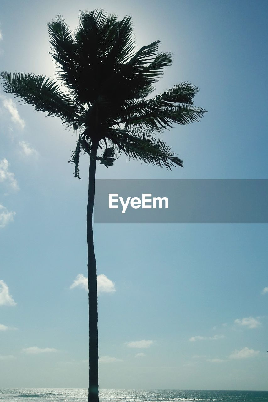 tree, palm tree, sky, nature, tree trunk, tranquility, low angle view, beauty in nature, day, scenics, outdoors, growth, tranquil scene, no people, blue, sea, horizon over water, branch