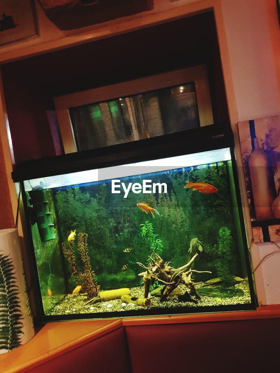 indoors, window, animal themes, no people, home interior, animals in the wild, close-up, animal wildlife, reptile, aquarium, nature, day