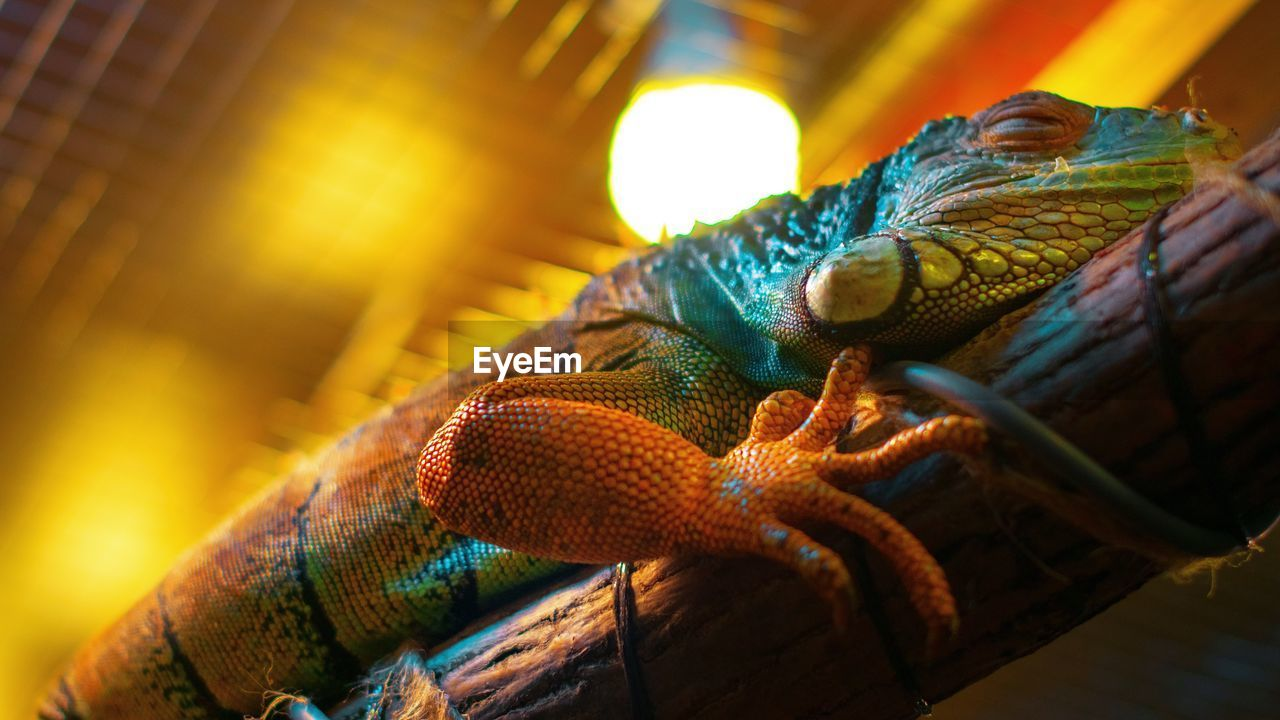 animal wildlife, animals in the wild, animal, animal themes, one animal, vertebrate, reptile, close-up, selective focus, no people, animal body part, nature, focus on foreground, lizard, day, outdoors, snake, animals in captivity, zoology, animal head, animal scale, animal eye