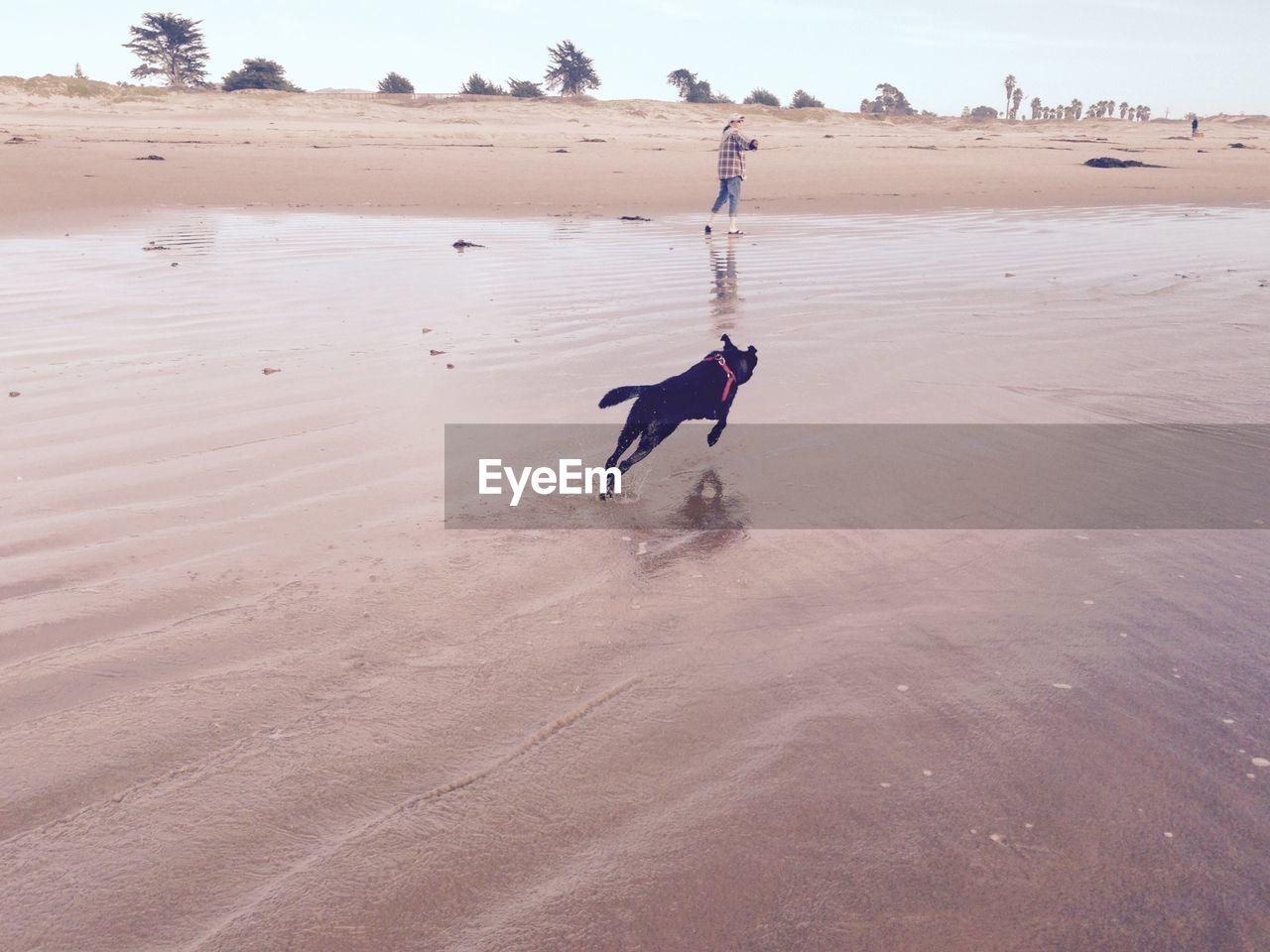 Dog running on shore at beach