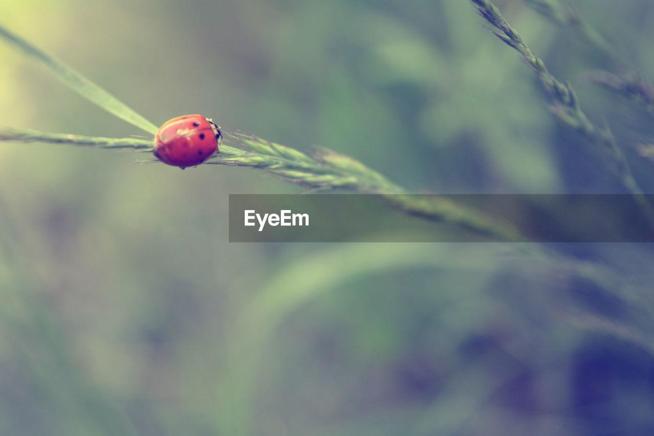 High angle view of ladybug on plant